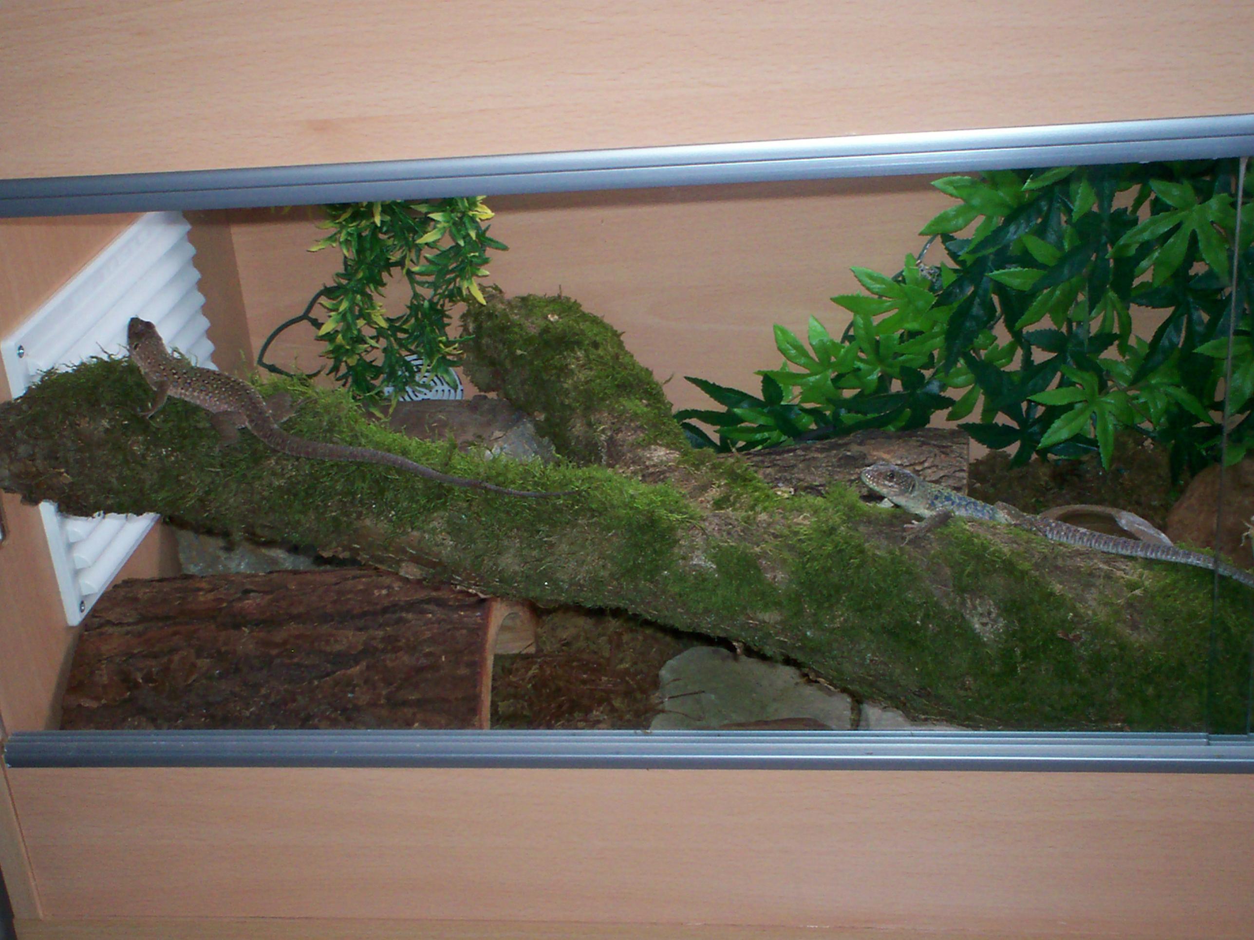 Naturalistic Vivs for European Reptiles... and teaser-001.jpg