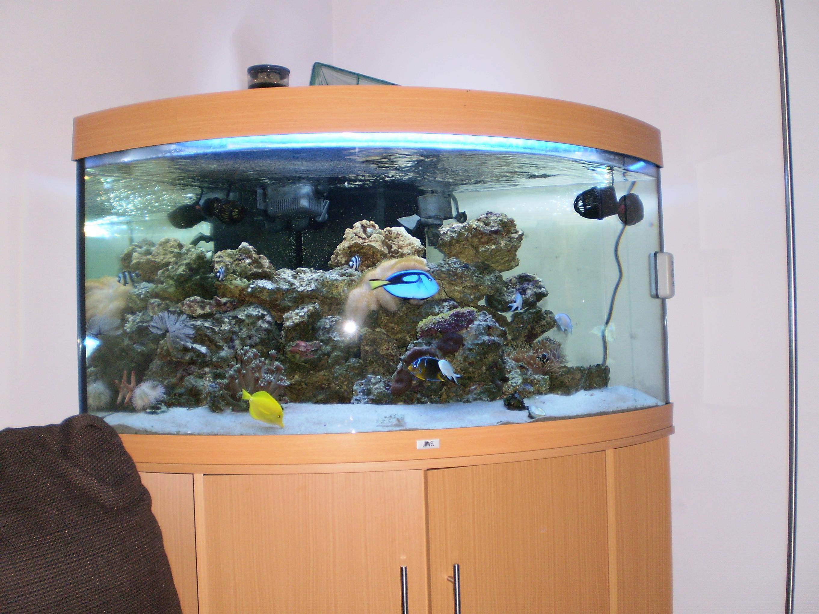 Aquarium fish tank sale uk - Jewel Trigon For Sale Or Swap 012 Jpg