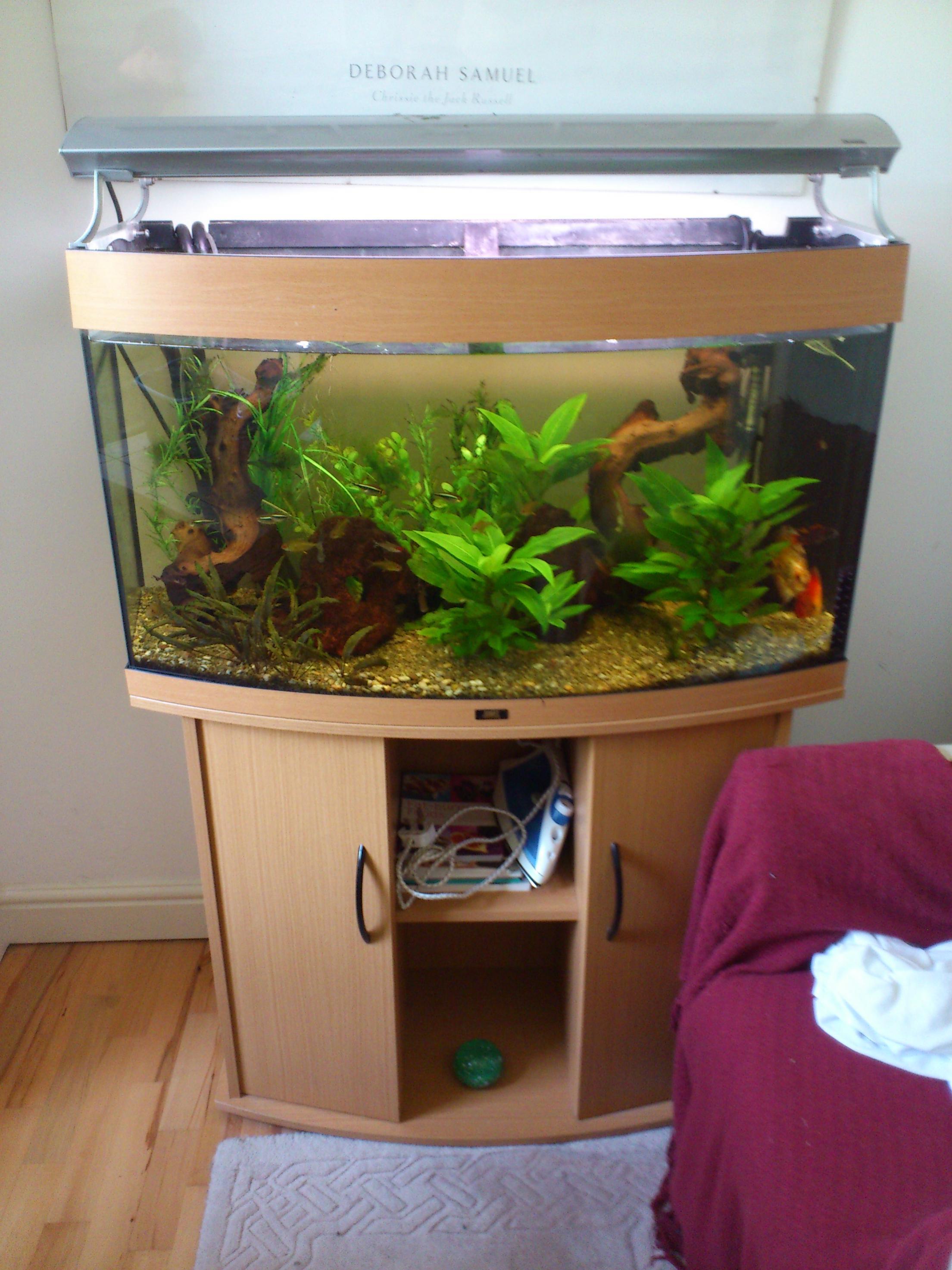 Fish tank juwel - 3ft Juwel Vision 180 Fish Tank Sale Or Swap 042 Jpg