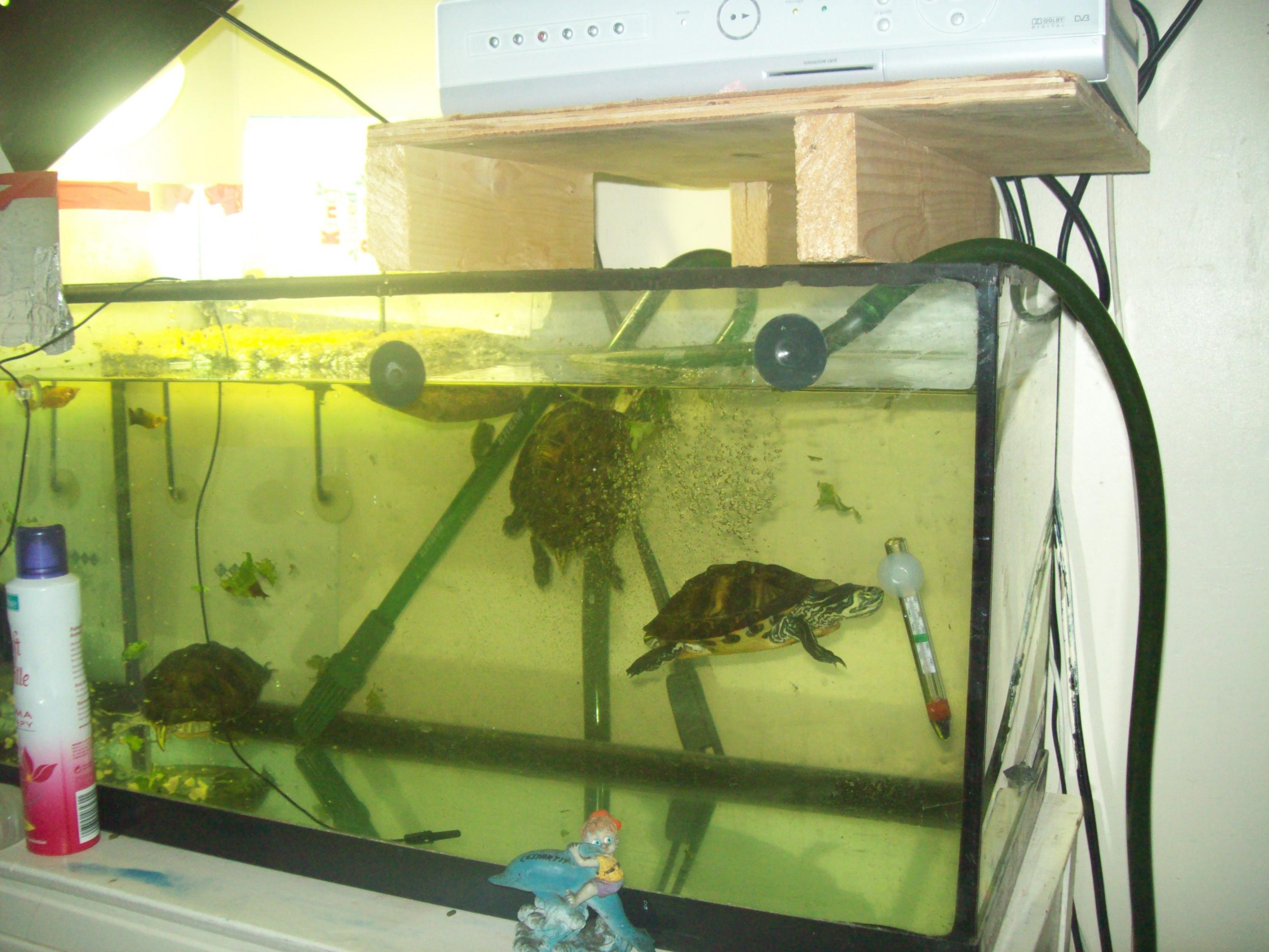 NW England Terrapins For Sale With Equiptment - Reptile Forums