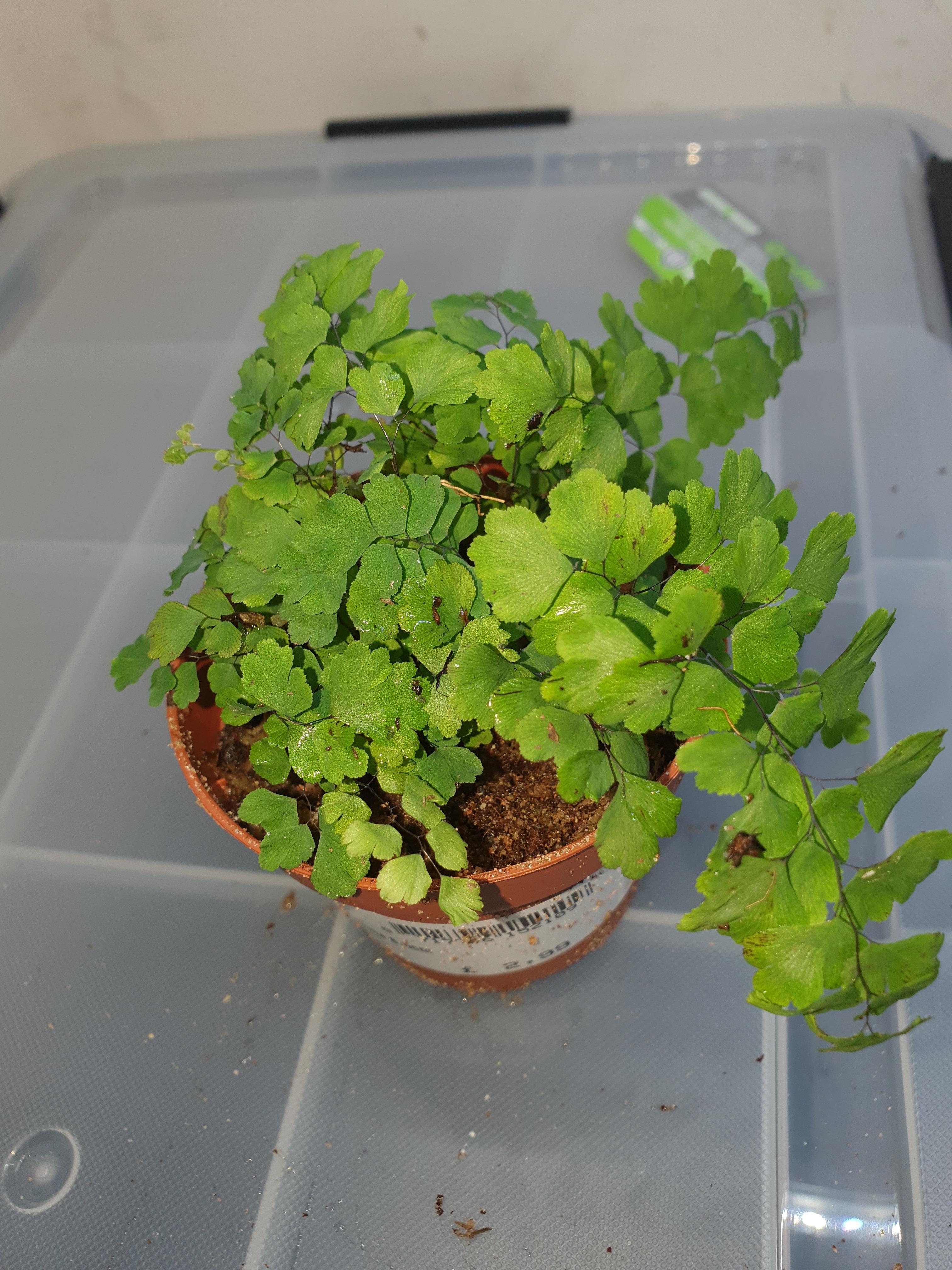 terrarium plants-15838620336874220893627677428187_1583862048358.jpg