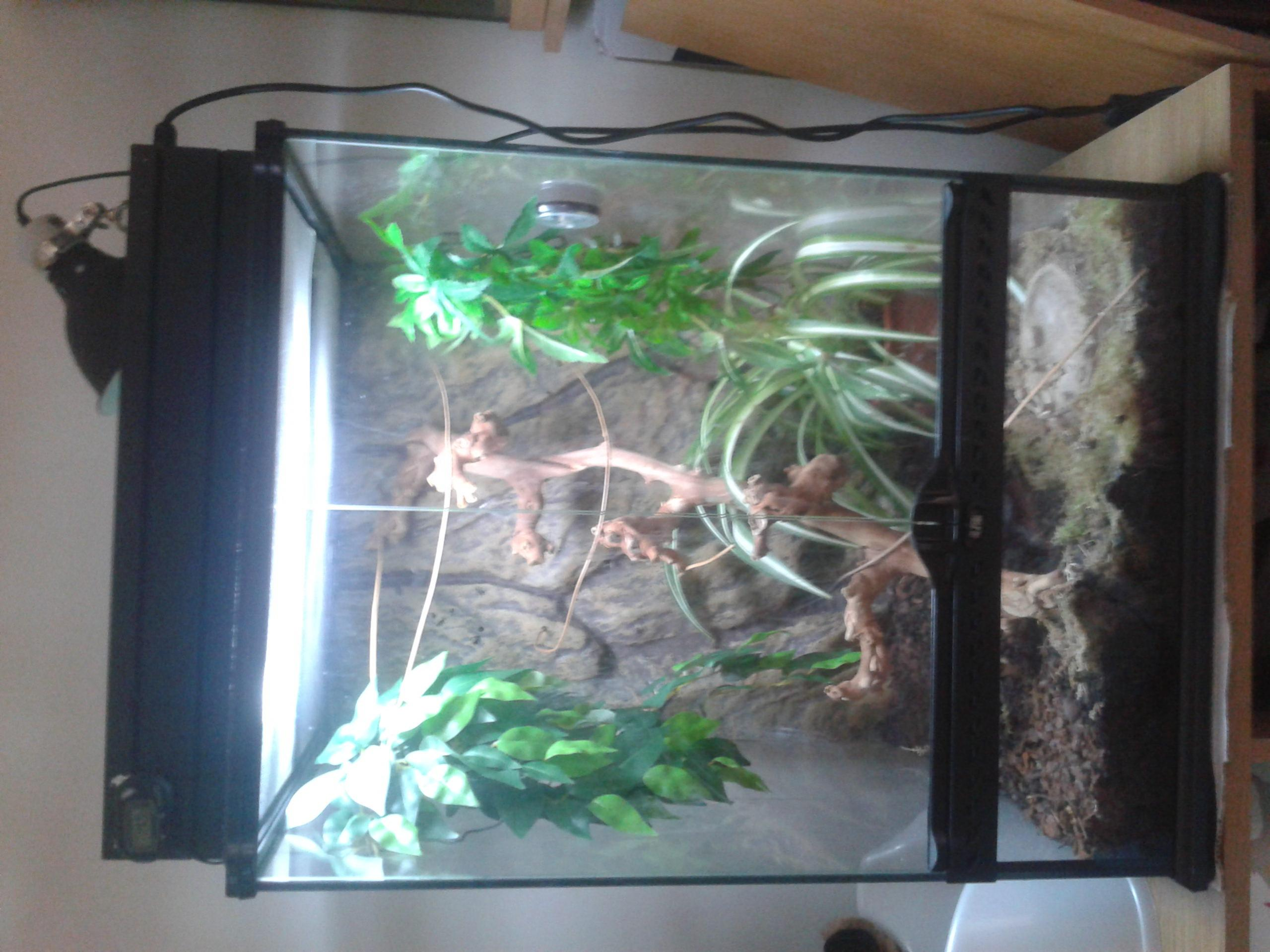 Eastern yemen chameleon/setup large exo terra terrarium - Reptile ...