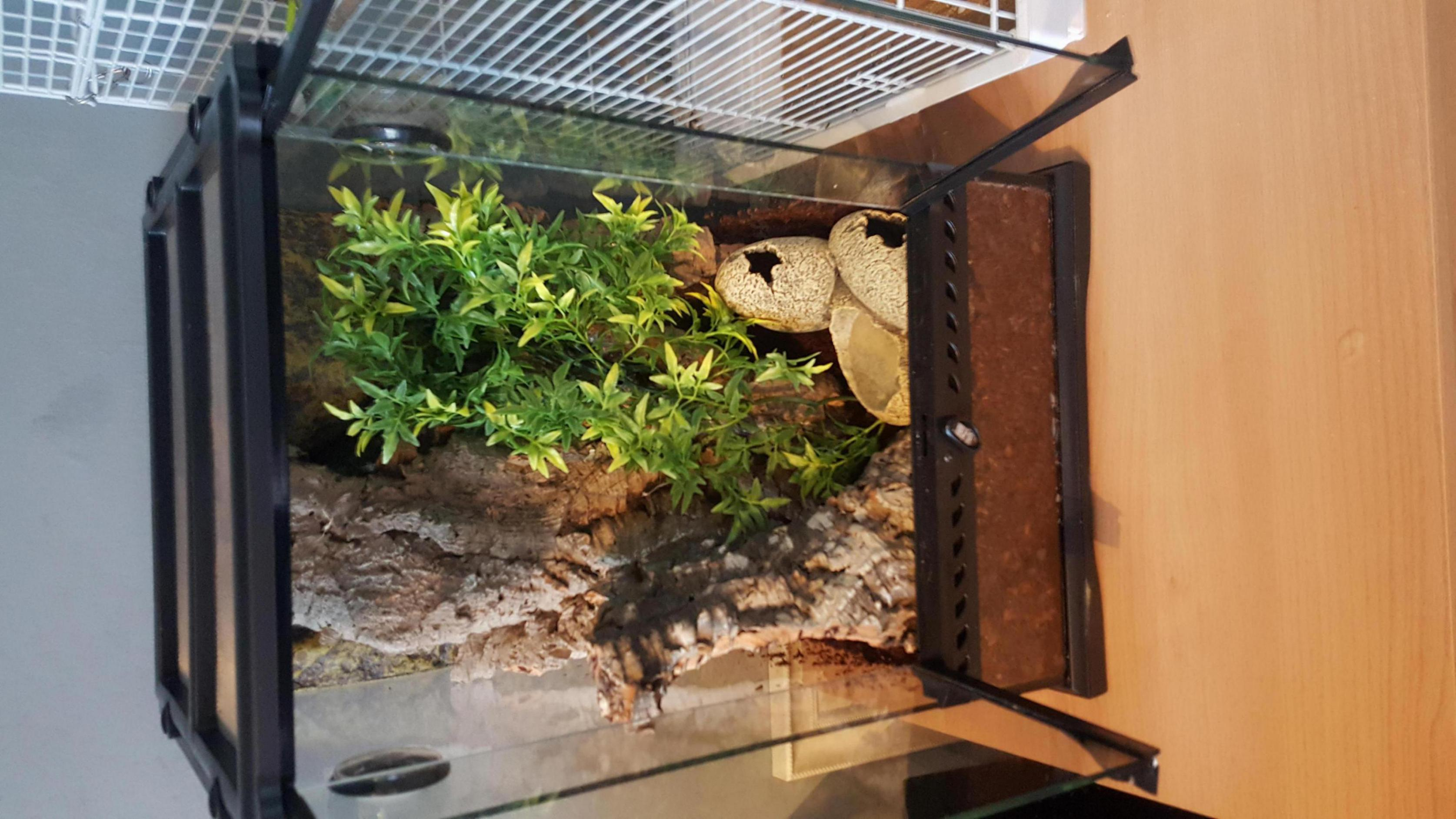 New Crested gecko-20180122_144549_1517089883480.jpg