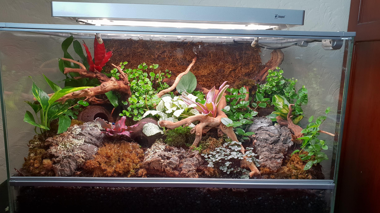Biopod terra smart microhabitat for sale-20180711_131755.jpg
