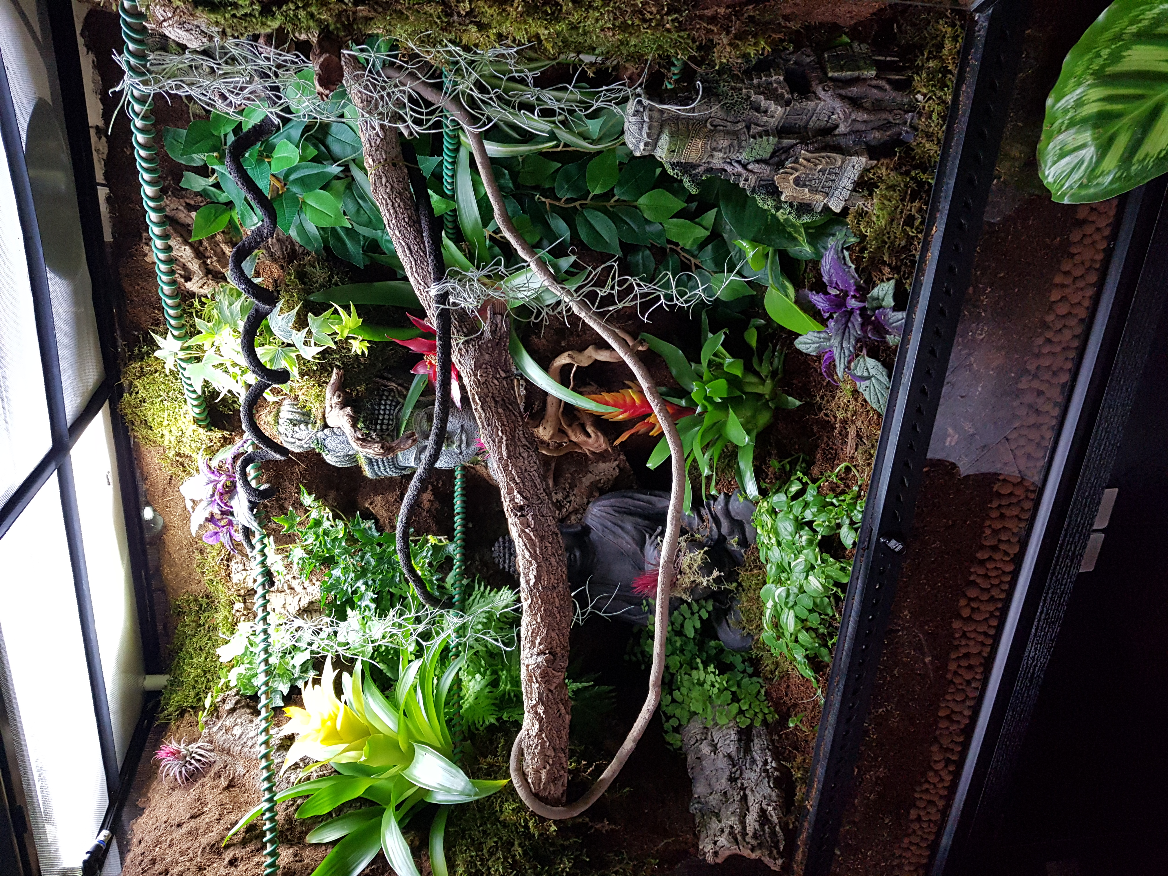 Show Me Your Viv Setups!!-20190127_133031_1556629728730.jpg