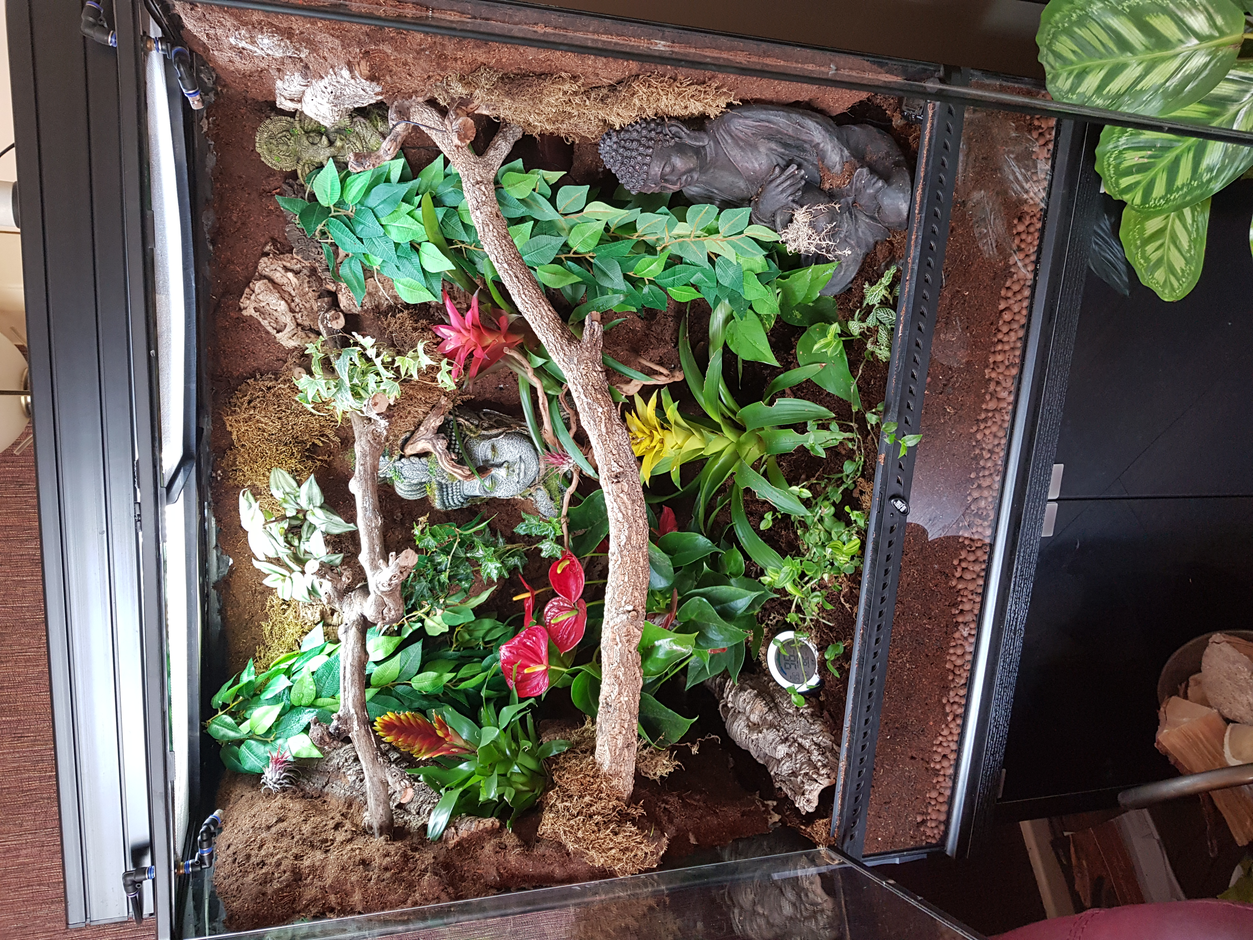 Show Me Your Viv Setups!!-20190408_102112_1556629768479.jpg