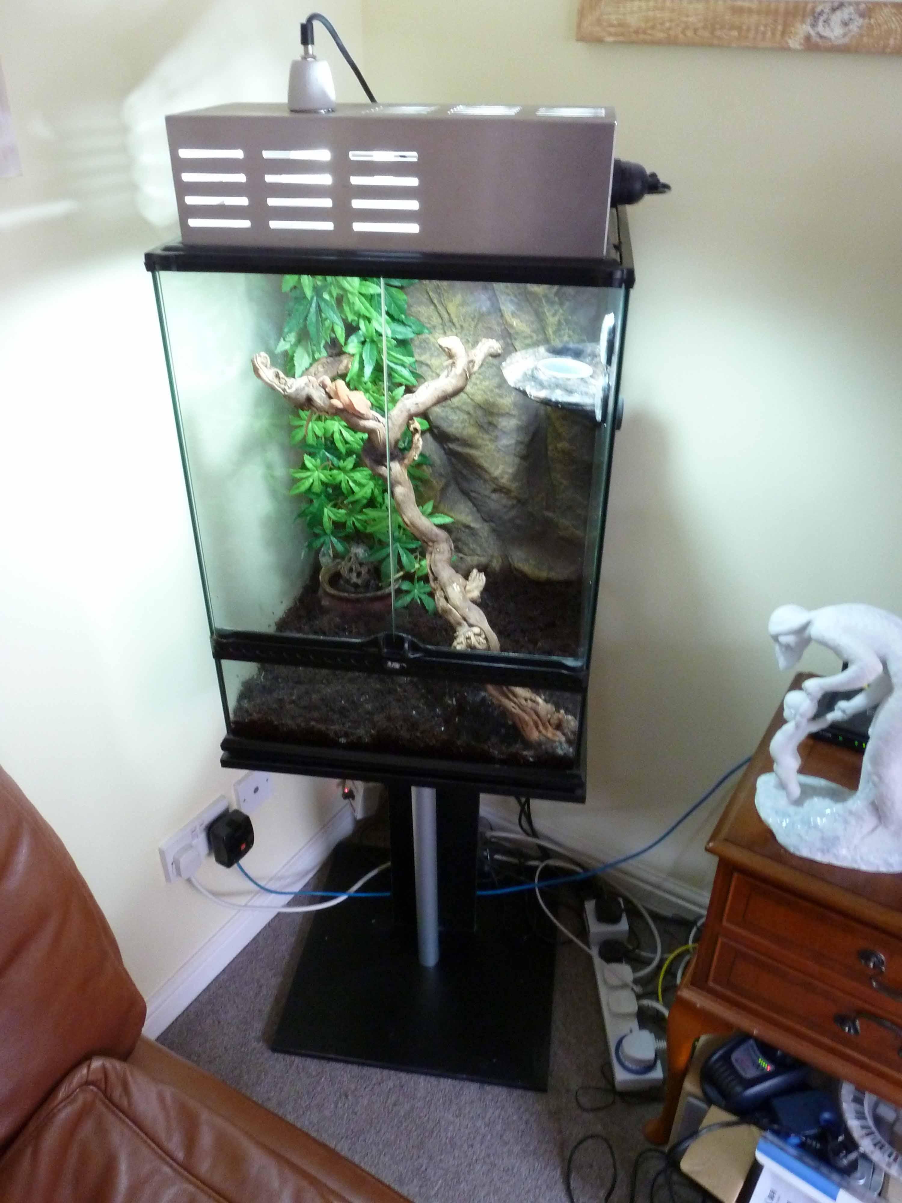 E Midlands Full Crested Gecko Setup With Crested Gecko