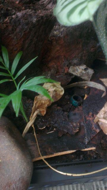 Custom rainforest waterfall exo terra vivarium terrarium set up-_58-5.jpg