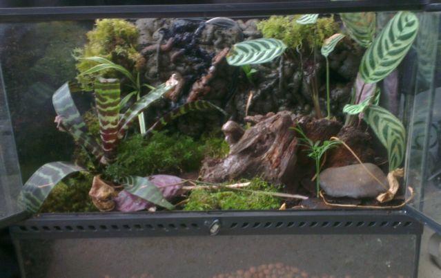 Custom rainforest waterfall exo terra vivarium terrarium set up-_58-6.jpg