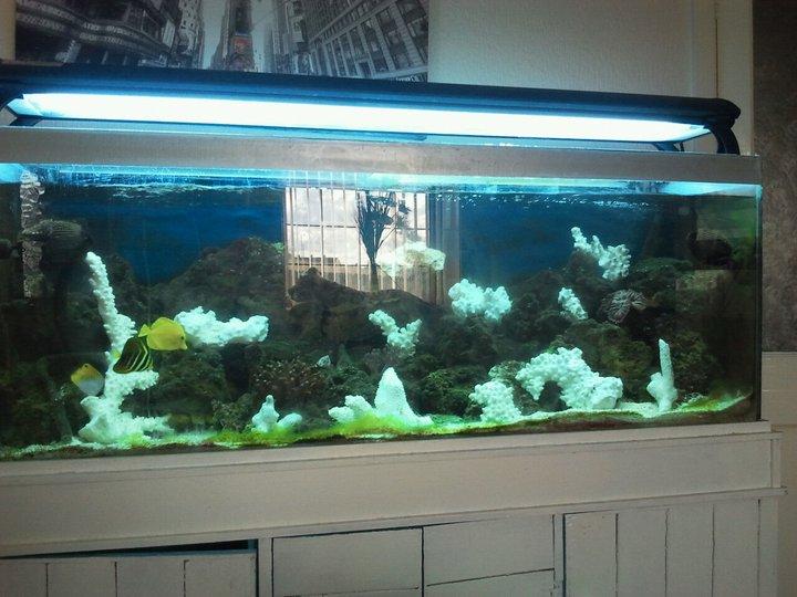 Pics Photos - Saltwater Aquarium Set Up And Saltwater Tropical Fish