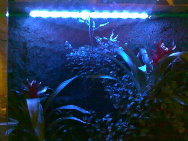 LED Lighting-.jpg