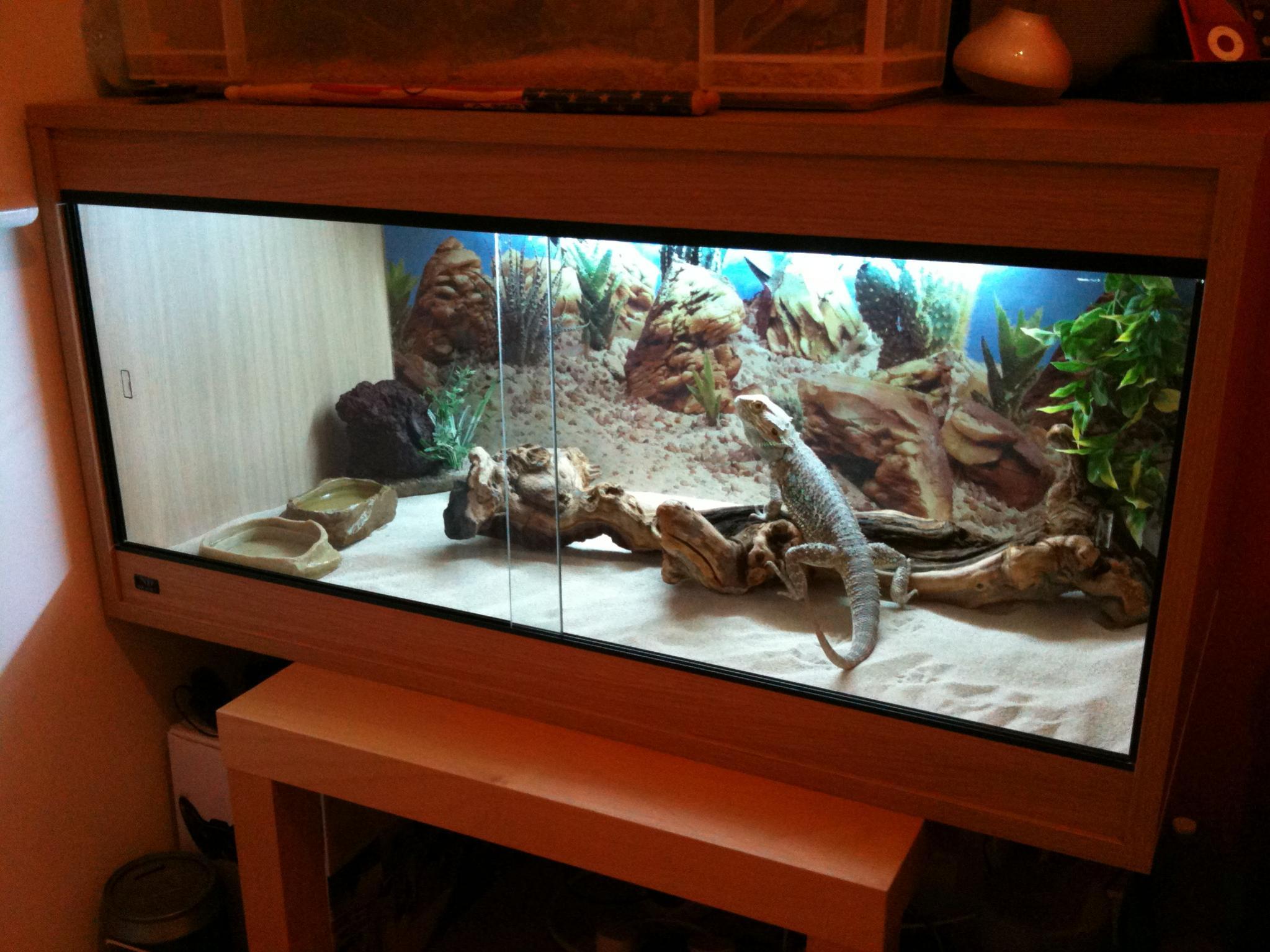 Ne England Beech Vivarium With Bearded Dragon Reptile Forums