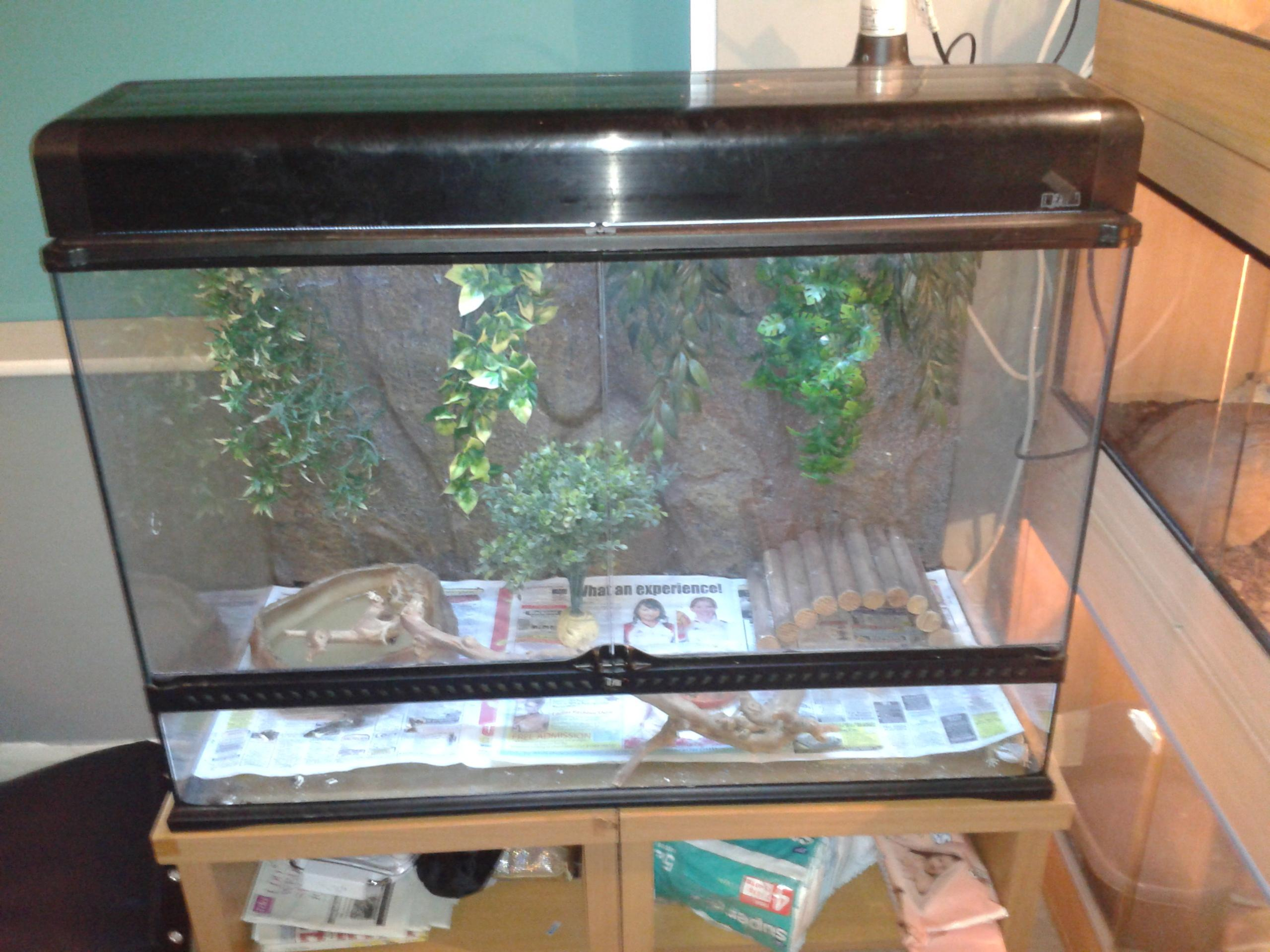 Nw England 2 Baby Bearded Dragons Plus A Large Exo Terra Tank Terrarium Reptile Forums