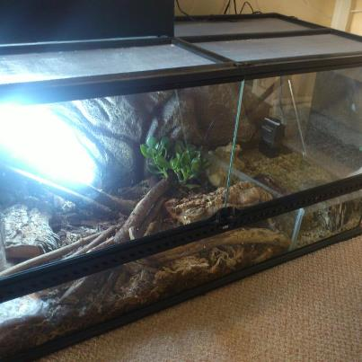Crocodile skink cage setup - photo#1