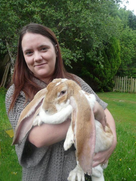Pics Photos - English Lop Eared Rabbits Http Rabbitlvr Com Merchant Id ...
