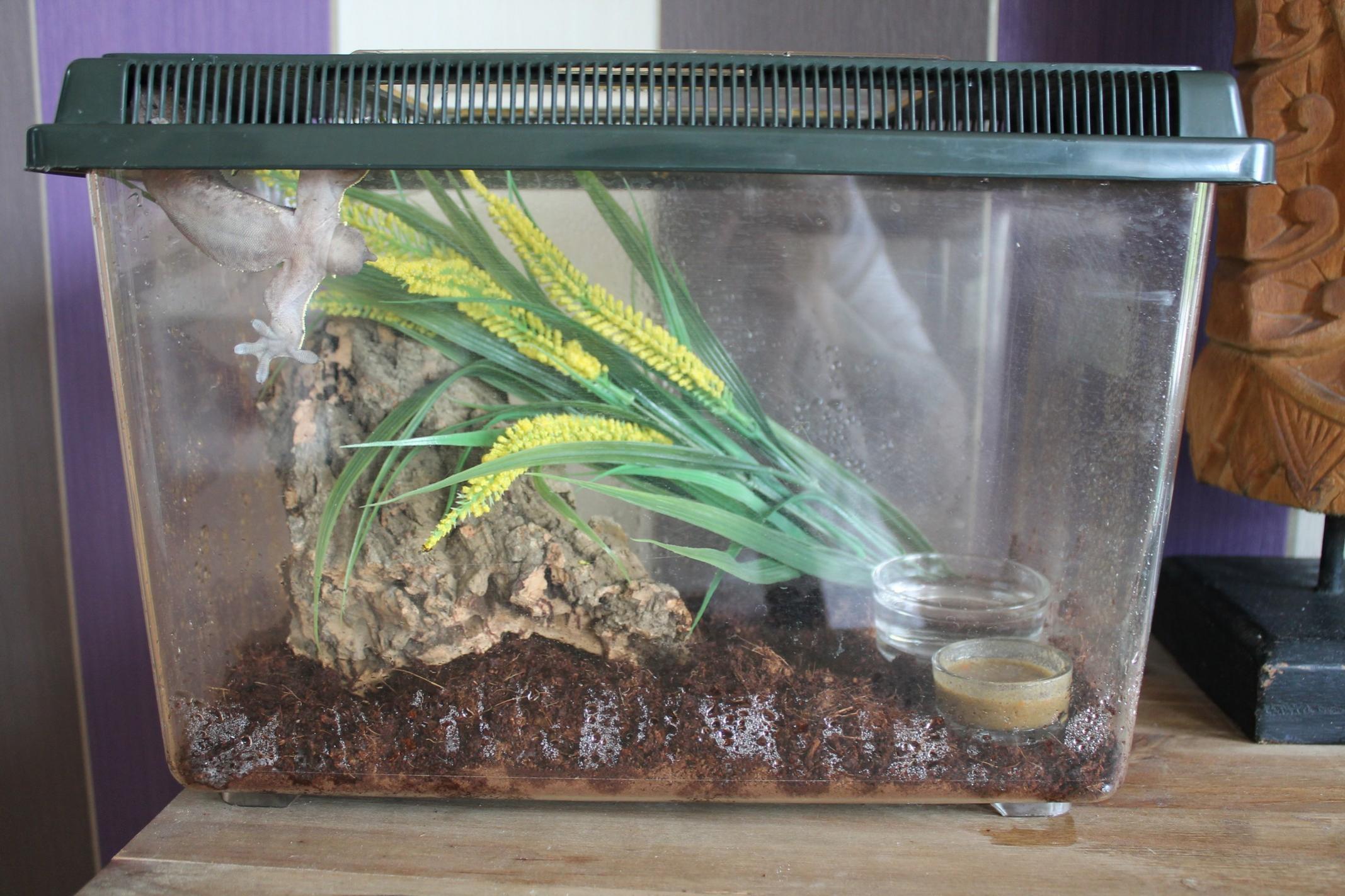 Adult cresties with seup & Baby cresties-dalm-setup.jpg