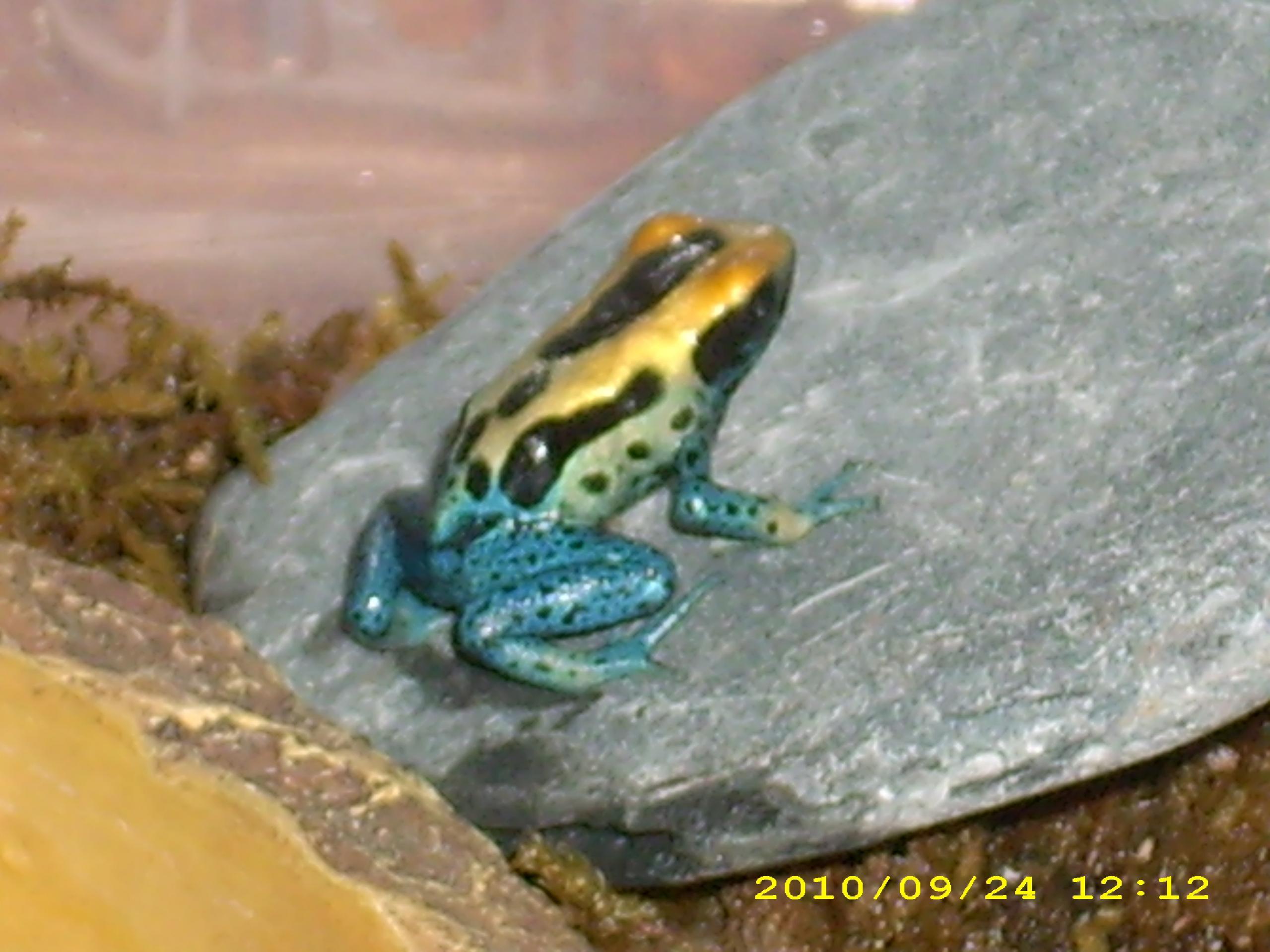 ... froglet froglet coloring pages tree frog froglet froglet clipart