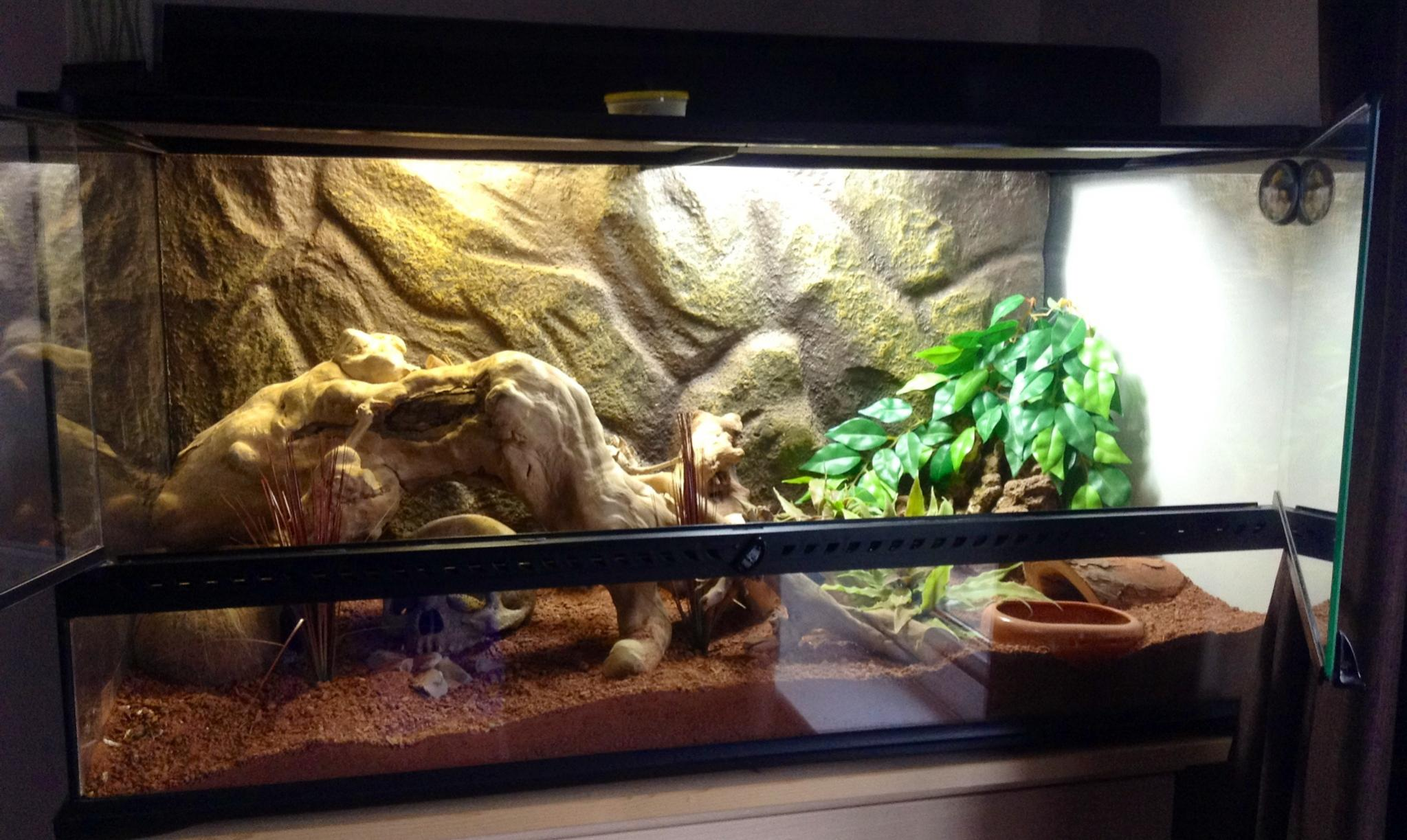 NE England 2 FEMALE Leopard geckos + Setup - Reptile ForumsLeopard Gecko Hatchling Tank Setup