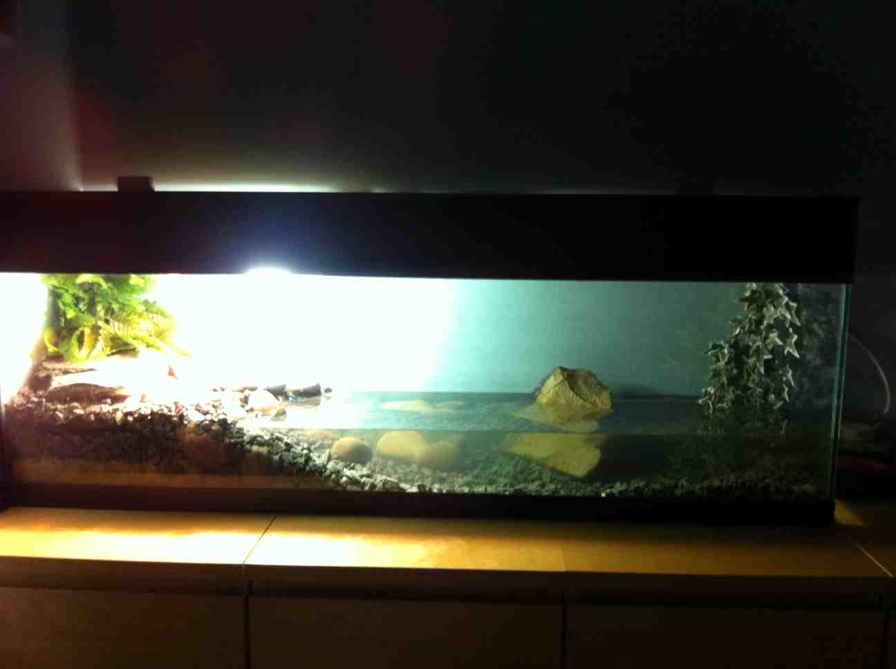 4ft Glass Fish Tank-glass-fish-tank.jpeg