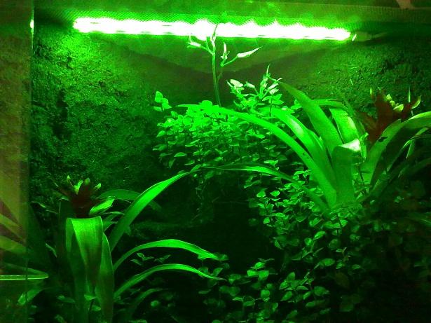LED Lighting-gn.jpg