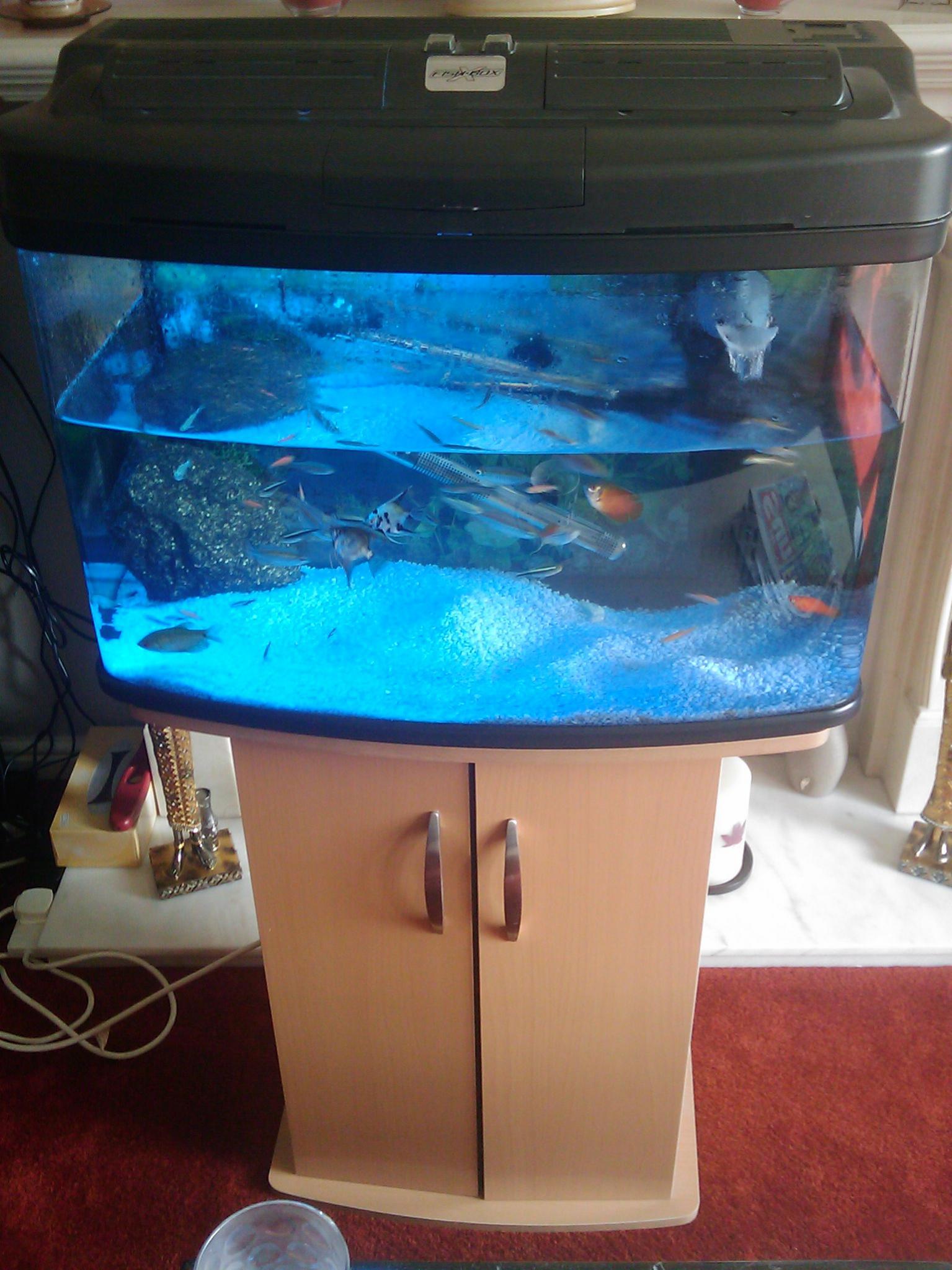 Aquarium fish tank sale uk - 64l Fish Tank For Sale Imag0004 Jpg
