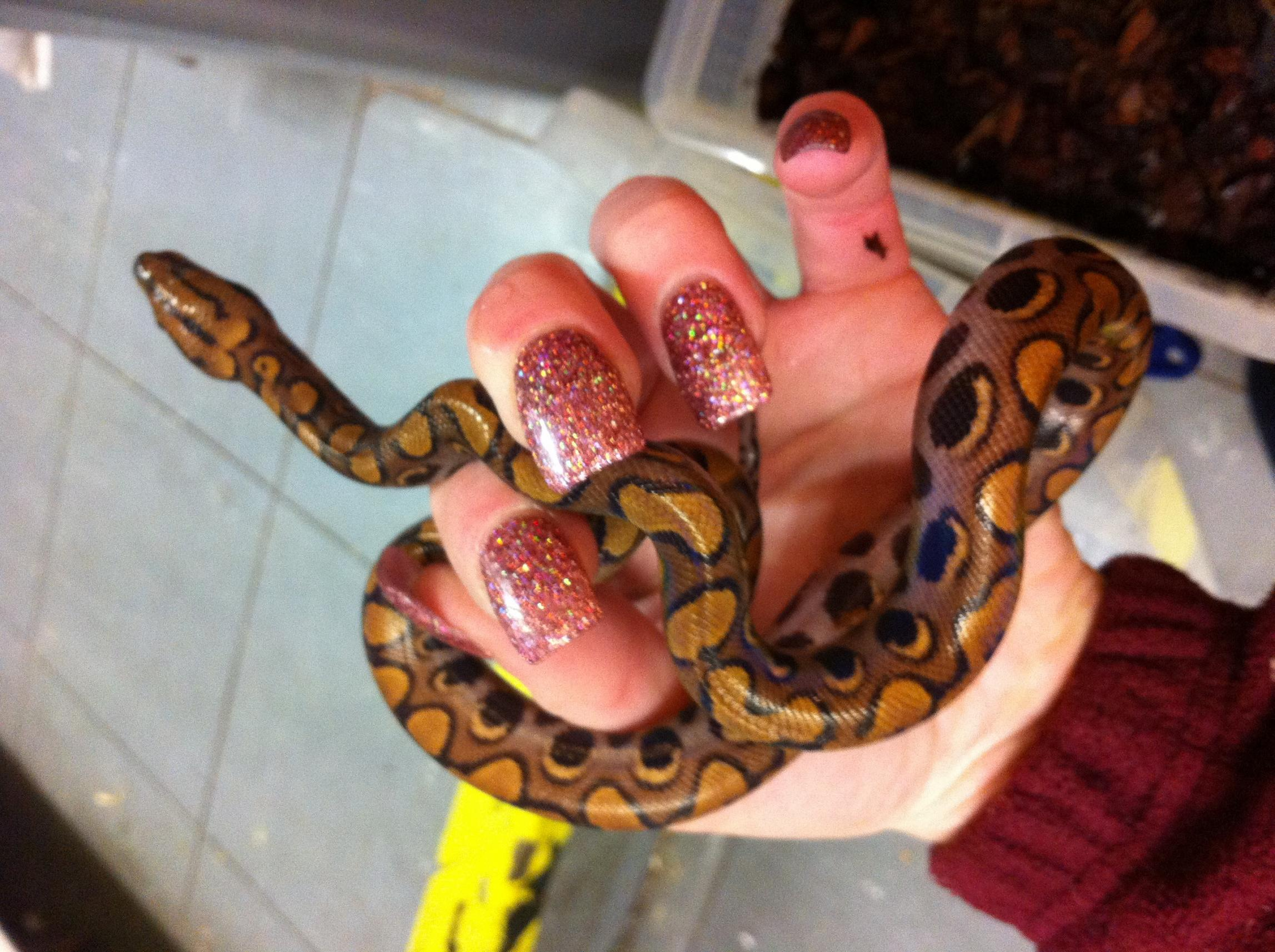 Cb12 female Brazilian rainbow boa  poos and feed well  lovely snake    Brazilian Rainbow Snake