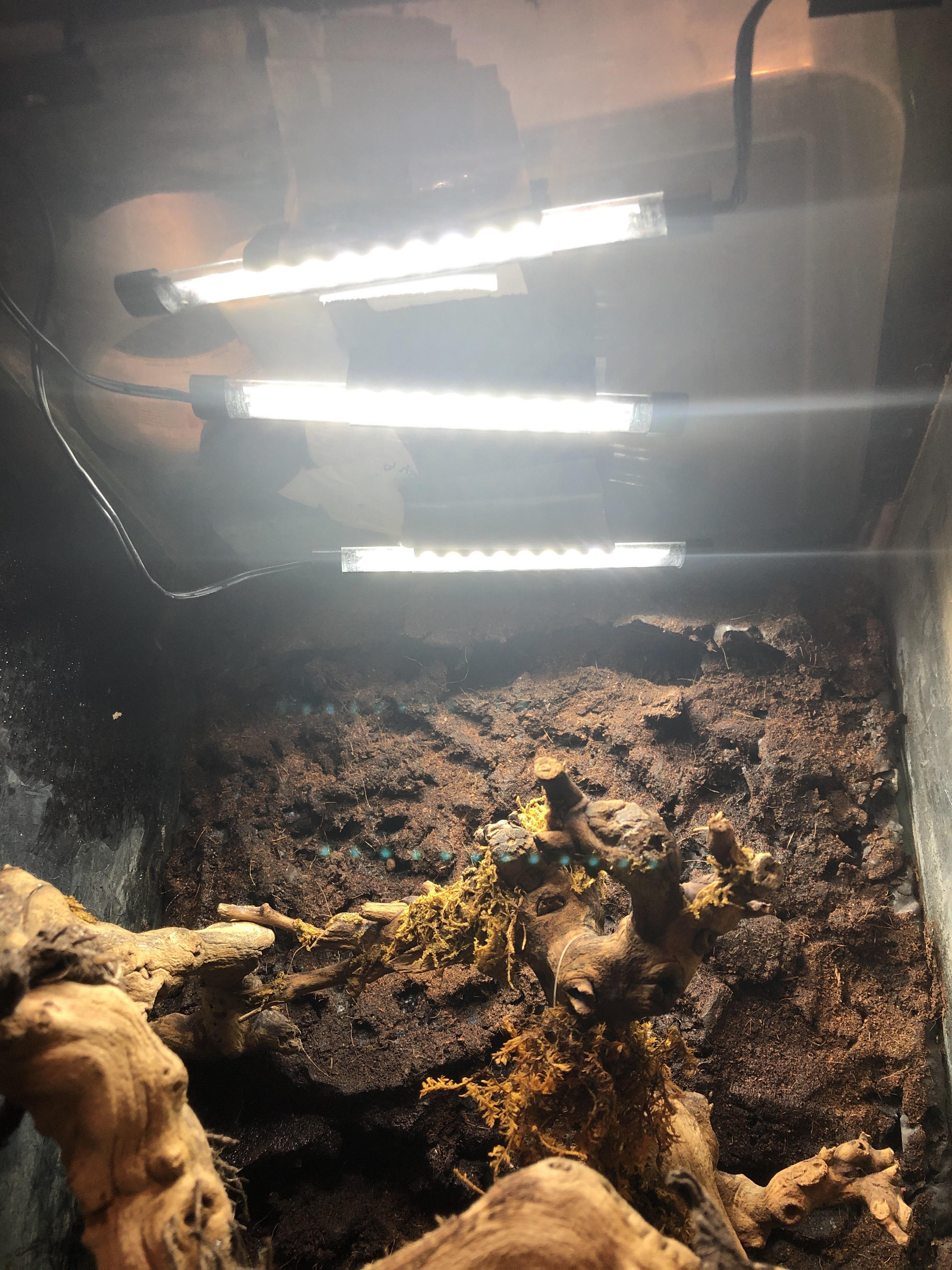 How do I light these enclosure-image_1555271298949.jpg
