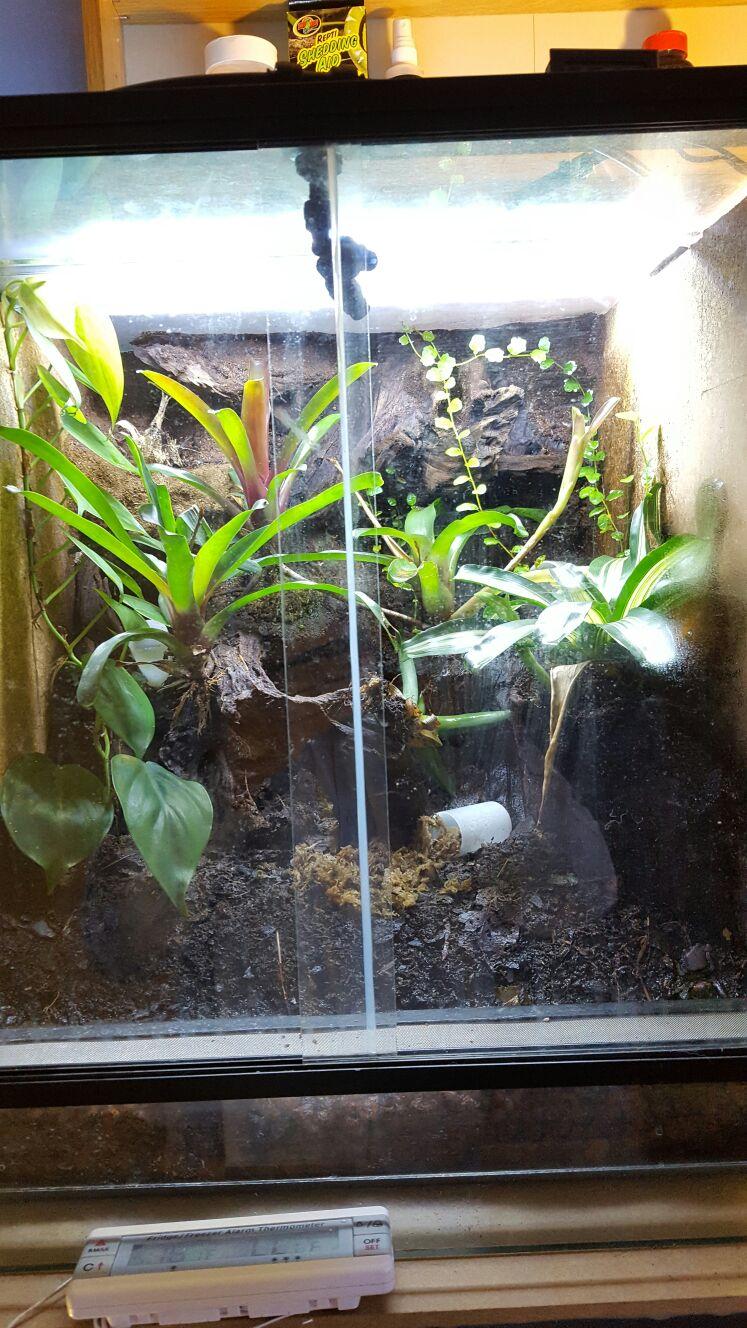 Dart Frog Vivs & Mist King Misting System-img-20161005-wa0003.jpg