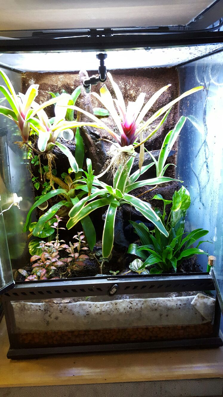 Dart Frog Vivs & Mist King Misting System-img-20161005-wa0005.jpg