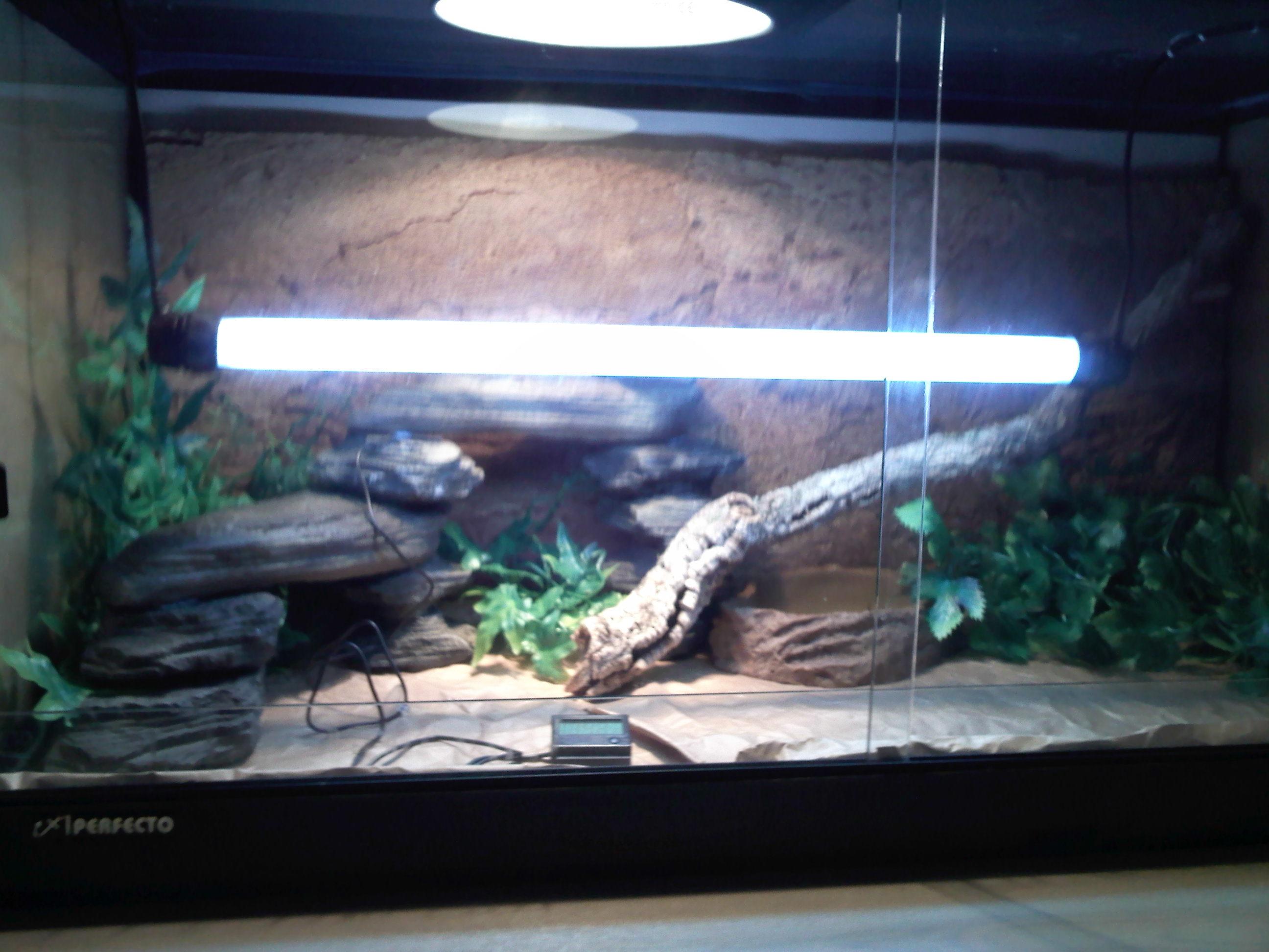 Full bearded dragon gecko or small lizard setup-img020.jpg ... & Eastern Full bearded dragon gecko or small lizard setup - Reptile ... azcodes.com