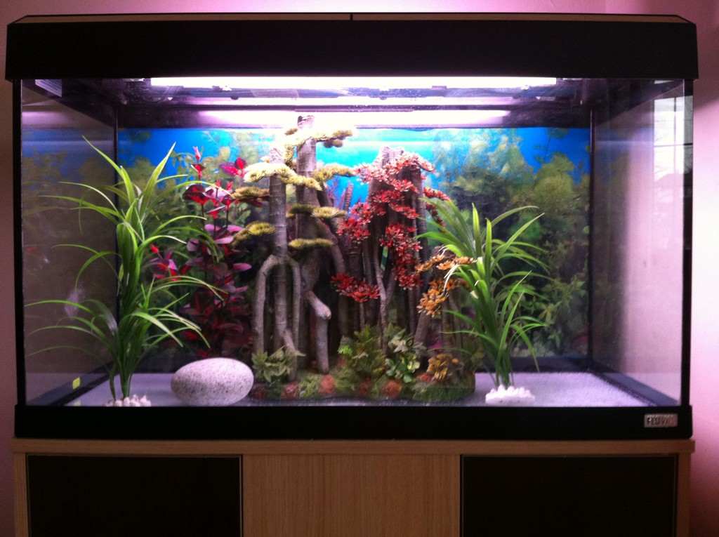 ... - Fluval Roma 125 Fish Tank Over 300 Of Set Up On Ebay End Time 25
