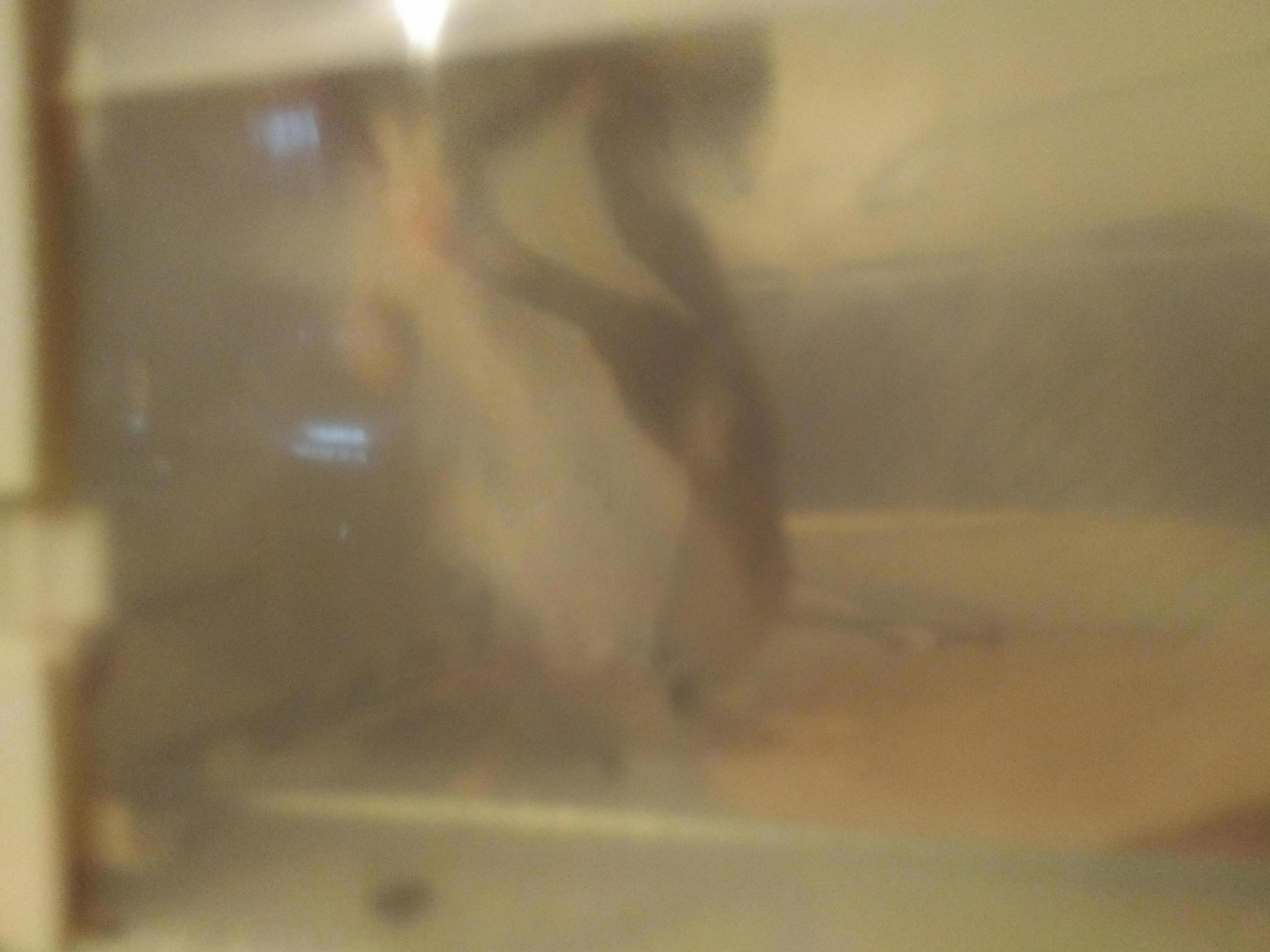 Wild rats/mice-img_20171207_0724024_1512632722495.jpg