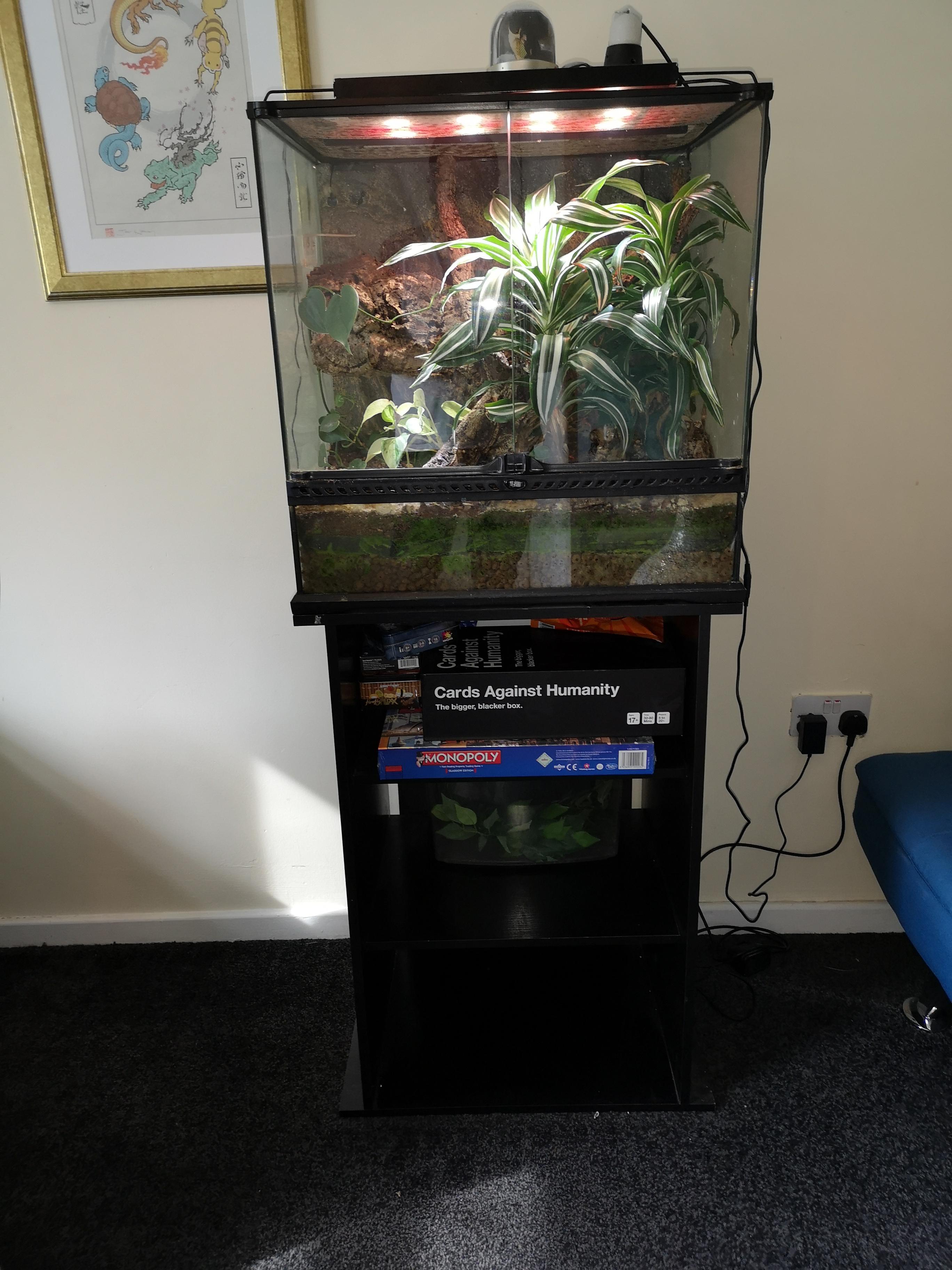 Breeding trio Crested Geckos & Full Bio set up-img_20190616_171608.jpg