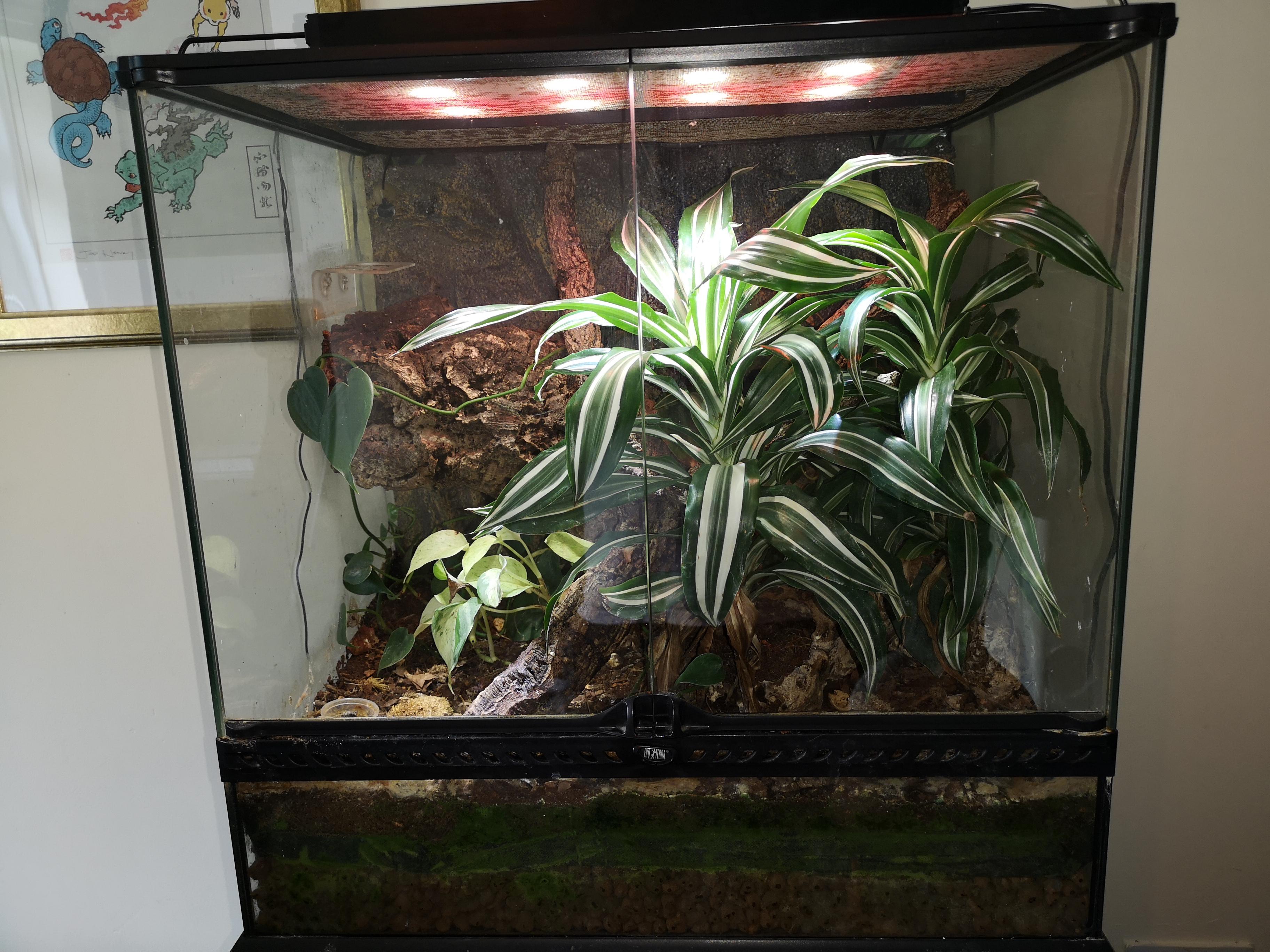 Breeding trio Crested Geckos & Full Bio set up-img_20190616_171615.jpg