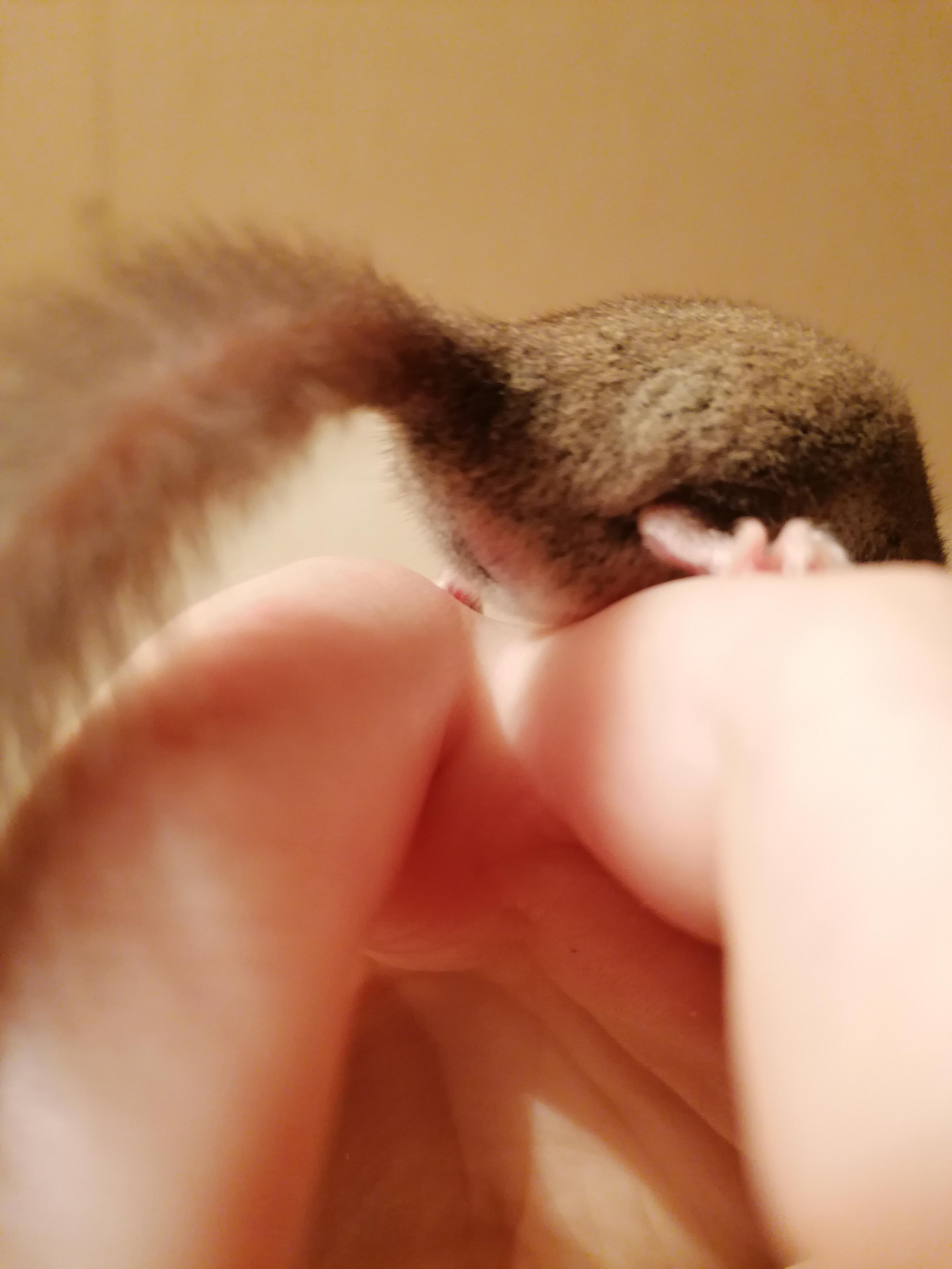 Sexing micro squirrel-img_20200817_000000_1597659667588.jpg