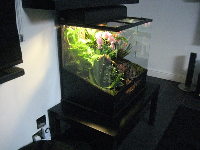 Pickup from Exo Terra Glass Terrarium PT2612 60 x 45 x 60 cm set up. & Reptile Forums - View Single Post - Scotland Exo Terra Glass ...
