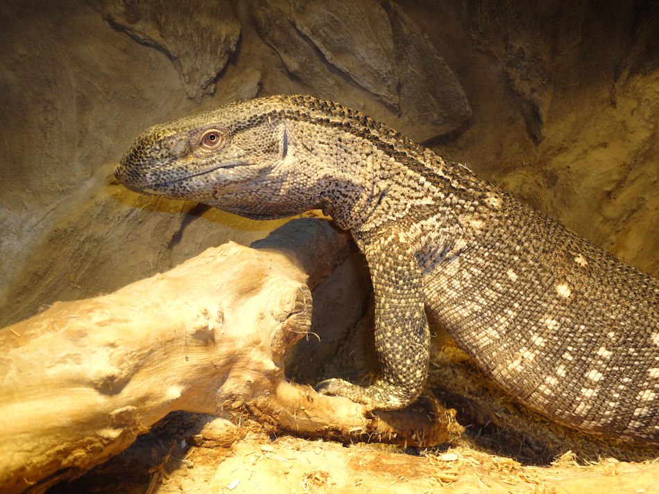 Throat Monitor For Sale Male Black Throat Monitor