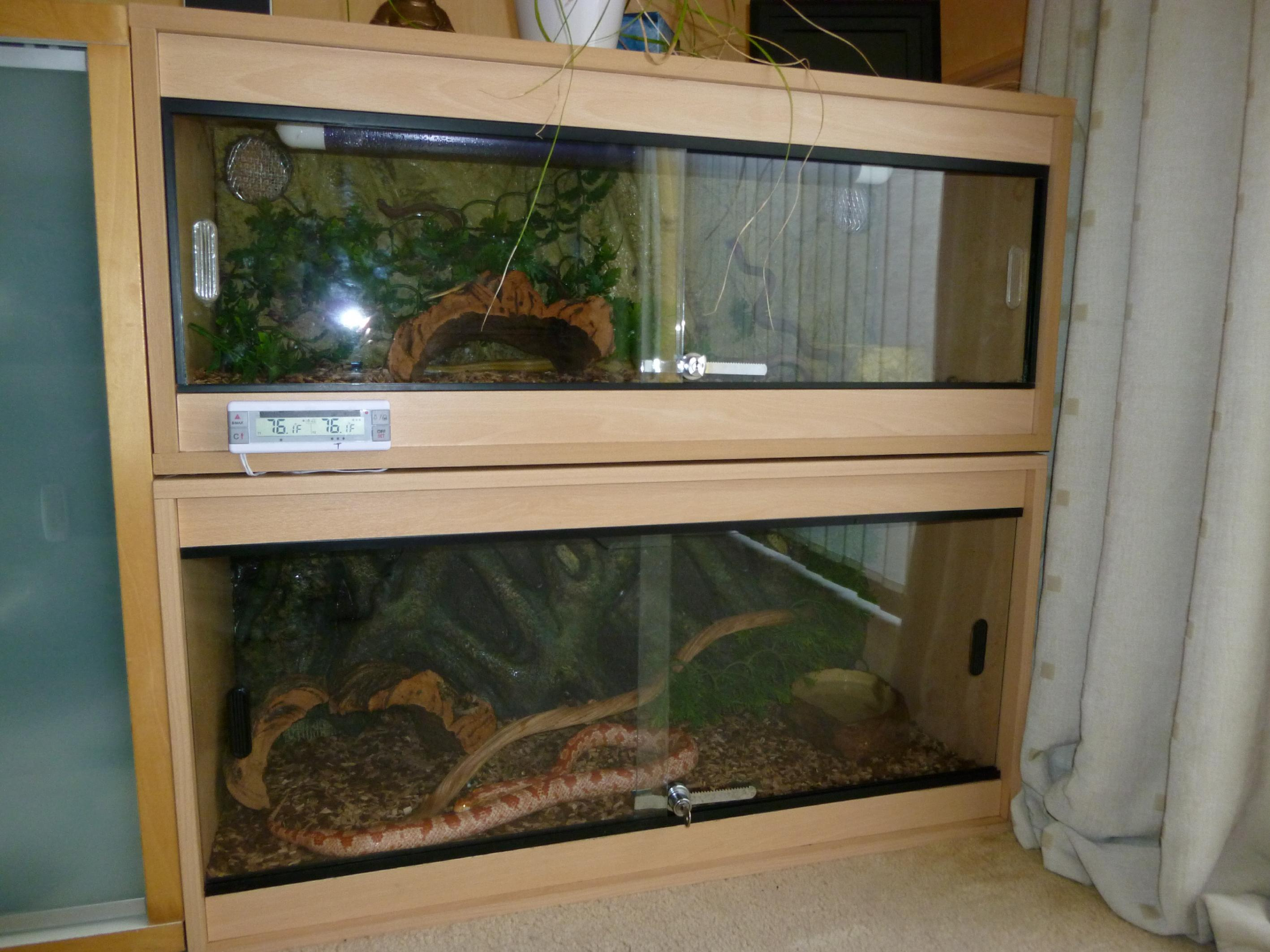 Se England Two Complete Vivariums With Cornsnakes