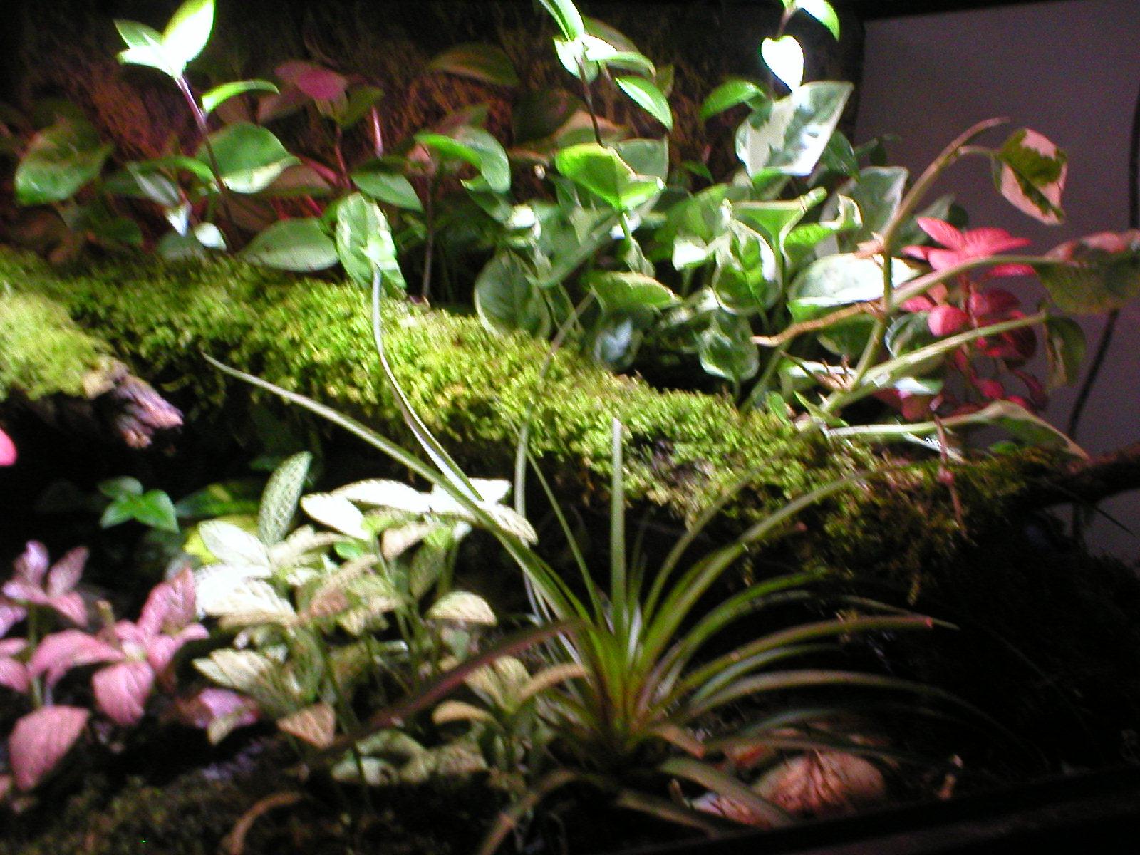 need some help to rearange terrarium-p1010004.jpg