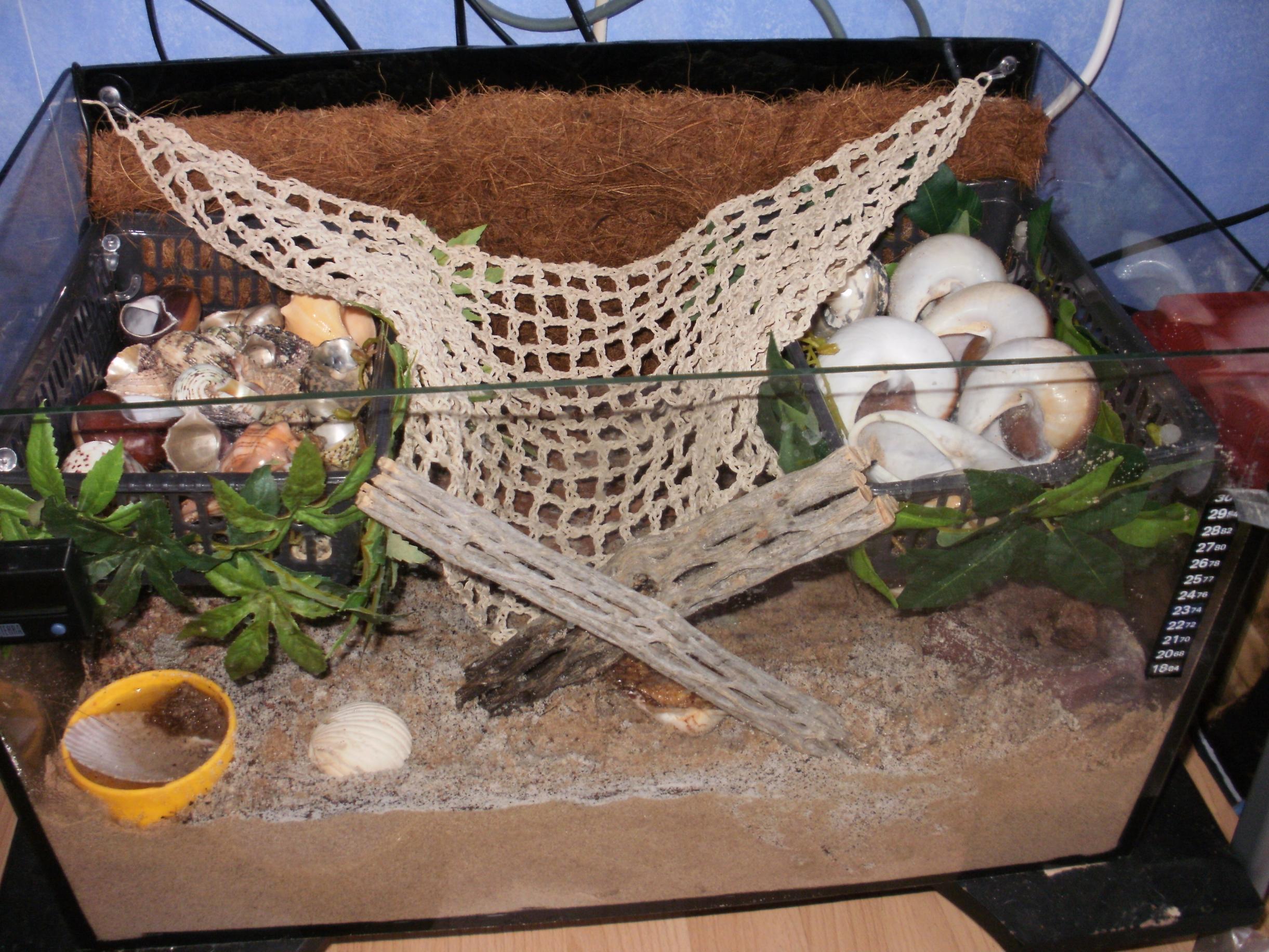 Pet hermit crab tanks - photo#24