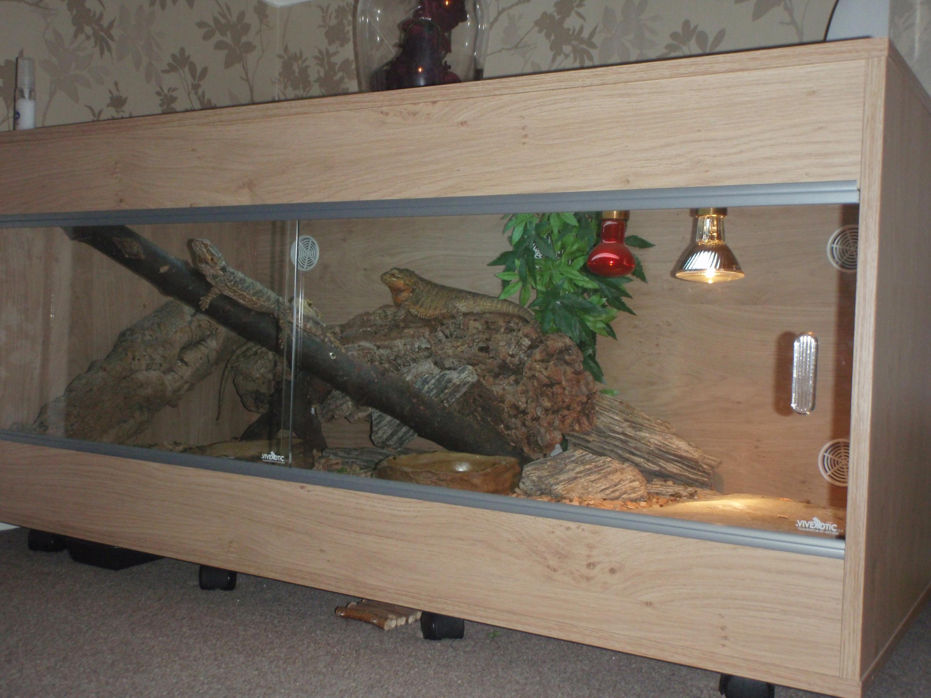 Se England Bearded Dragon Complete Set Up With 3x Bearded Dragons Reptile Forums
