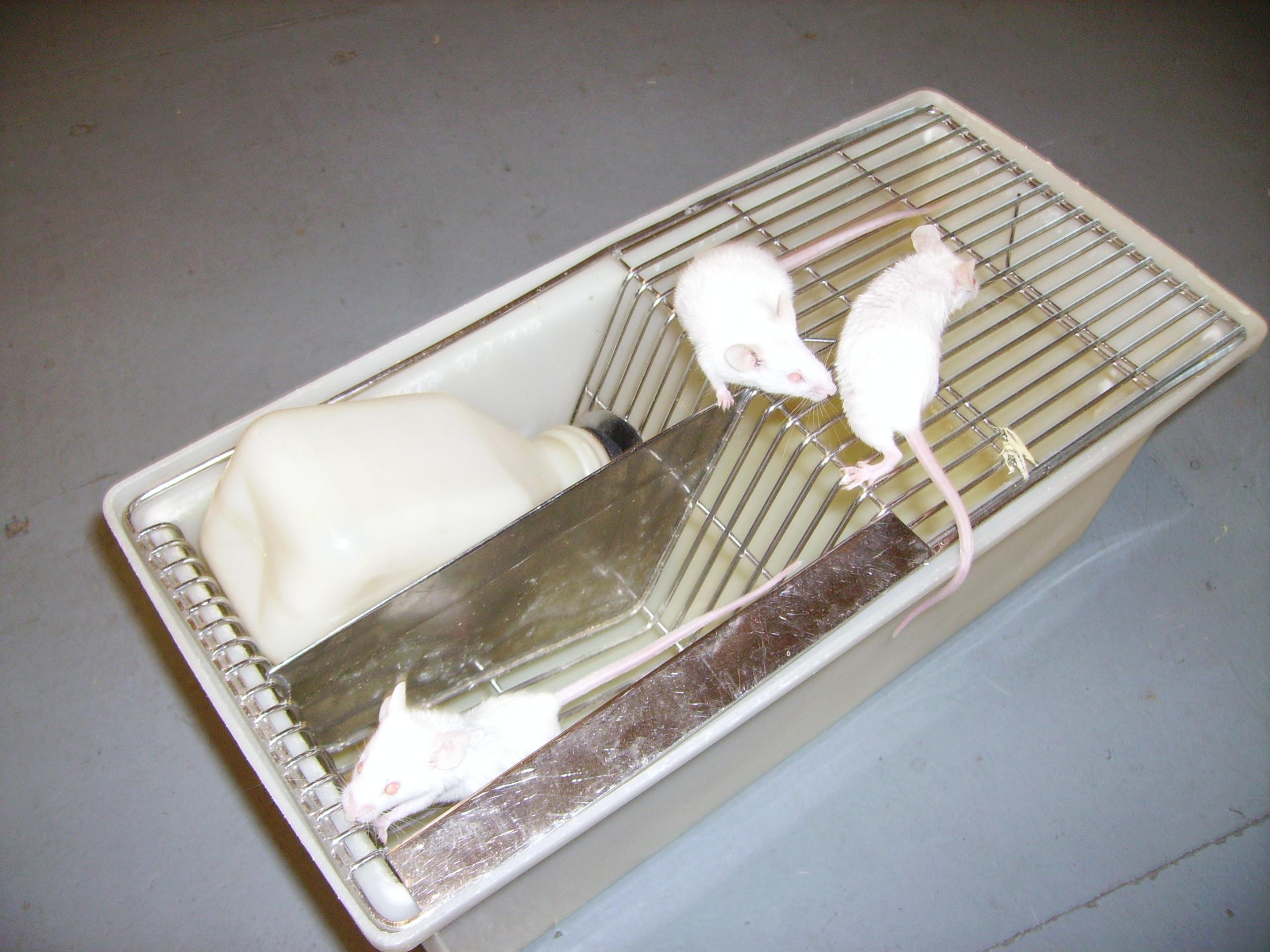 NW England Lab breeder cages and lab mice - Reptile Forums