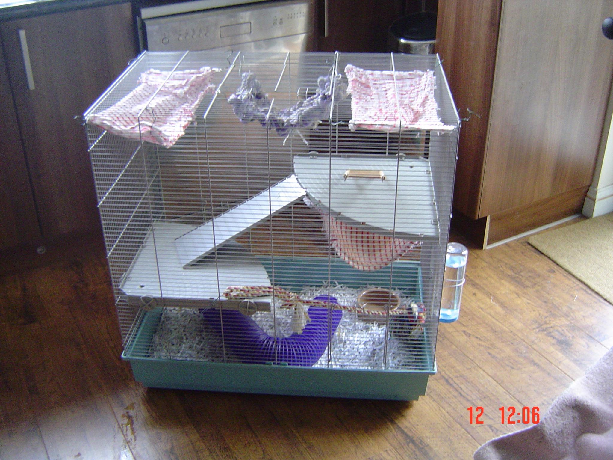 Sw England Jenny Rat Cage Devon Reptile Forums Jpg 2047x1535 Designs