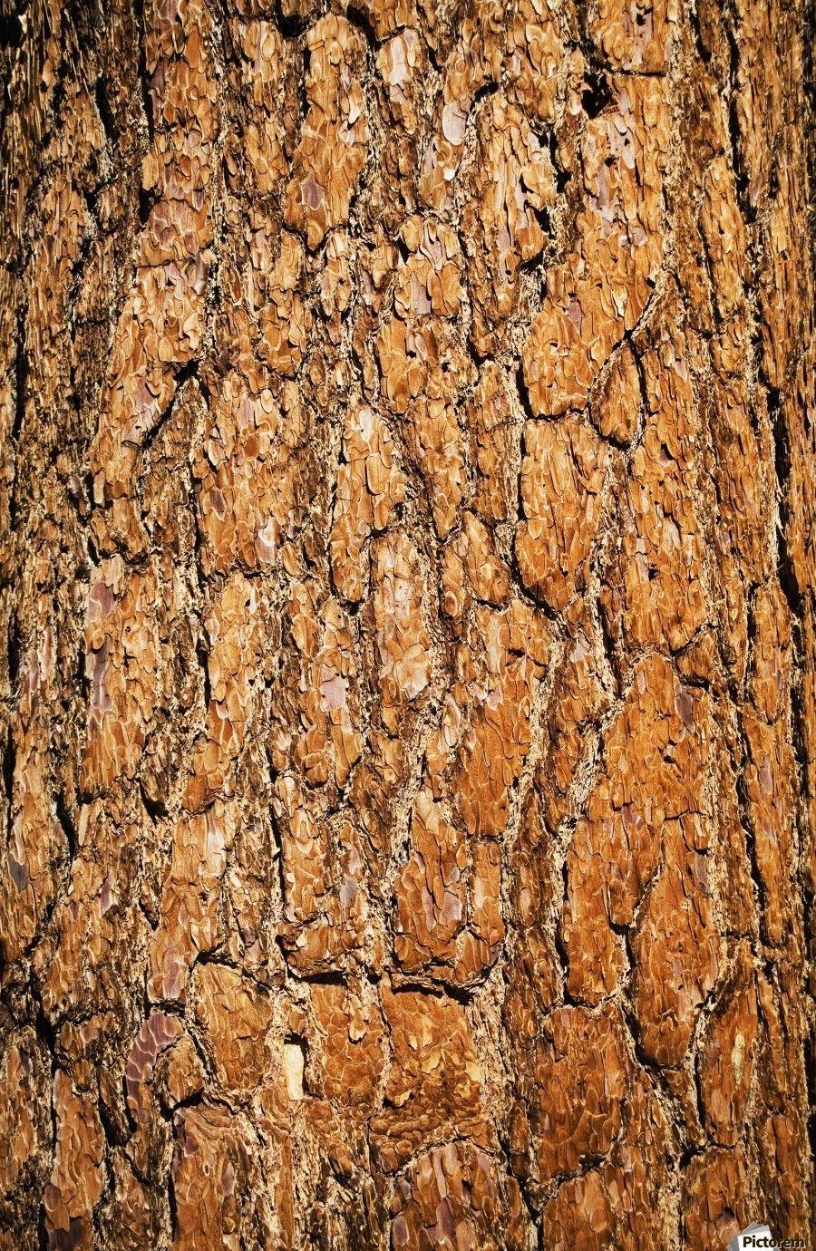tree bark background-s-l1600.jpg