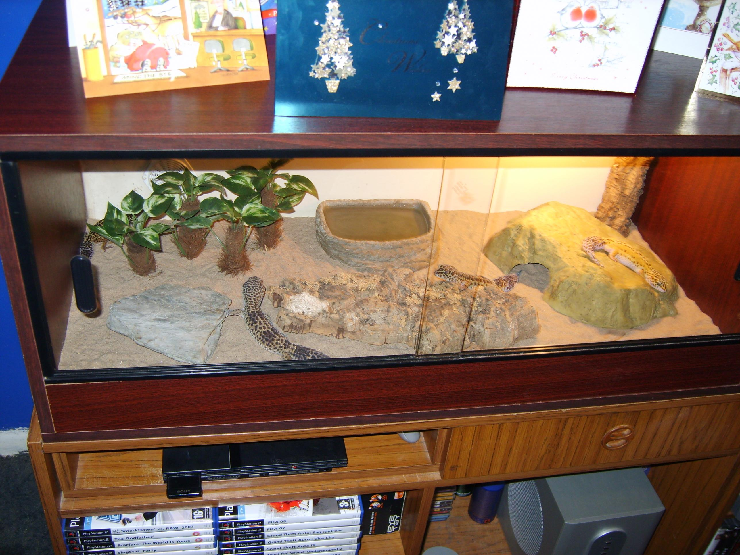 Europe leopard gecko and tank for swap - Reptile ForumsLeopard Gecko Hatchling Tank Setup
