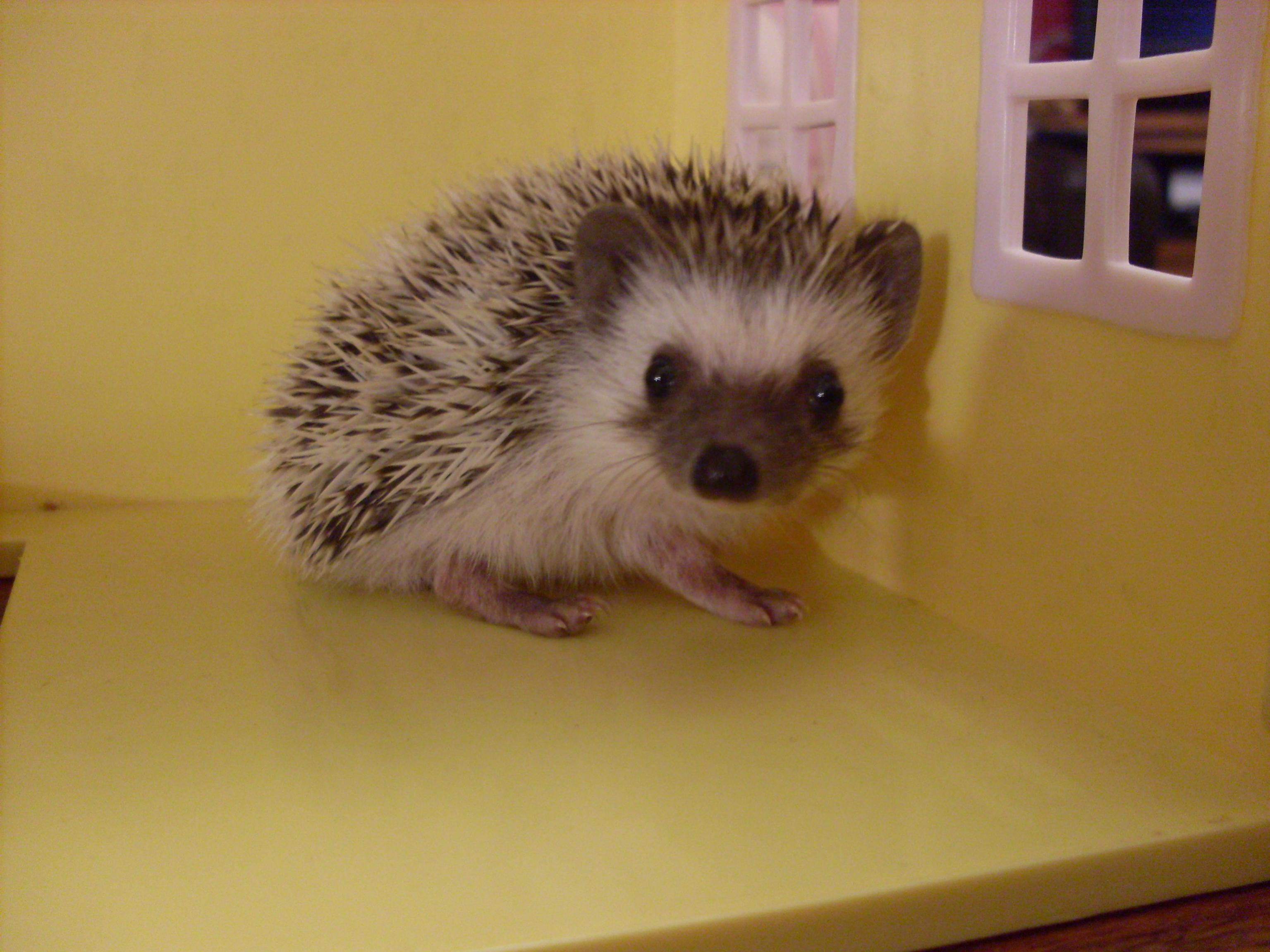 living hedgehogs have the her food e aubrey eastenders likes