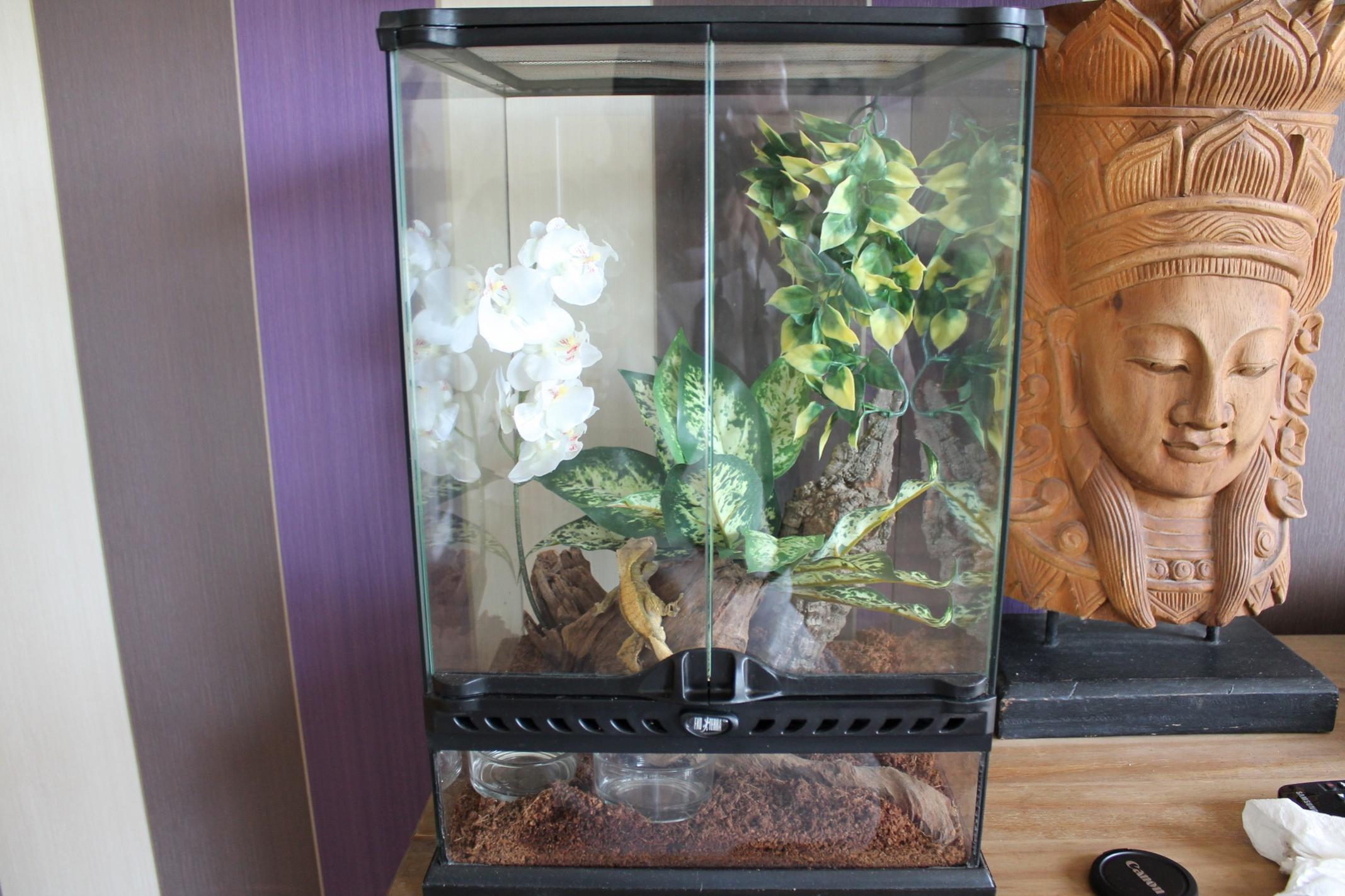 Adult cresties with seup & Baby cresties-setup-1a.jpg