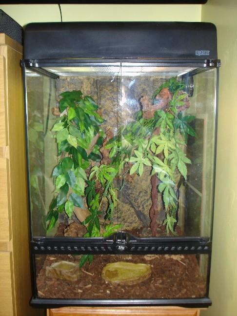 E Midlands Gargoyle Gecko Complete Set Up Reptile Forums
