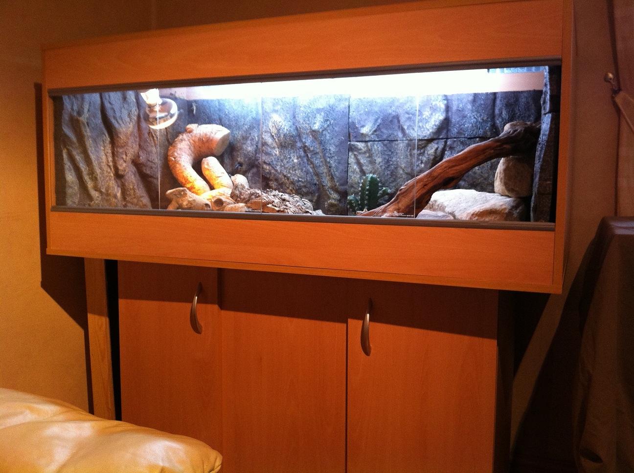Scotland Bearded Dragon Amp 4 Foot Viv For Sale Reptile Forums