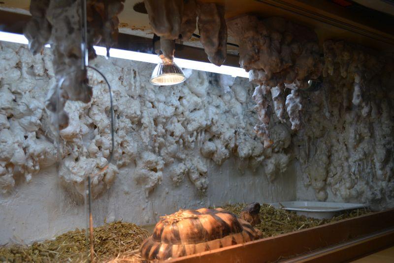 Scotland 4 Years Old Marginated Tortoise Vivarium